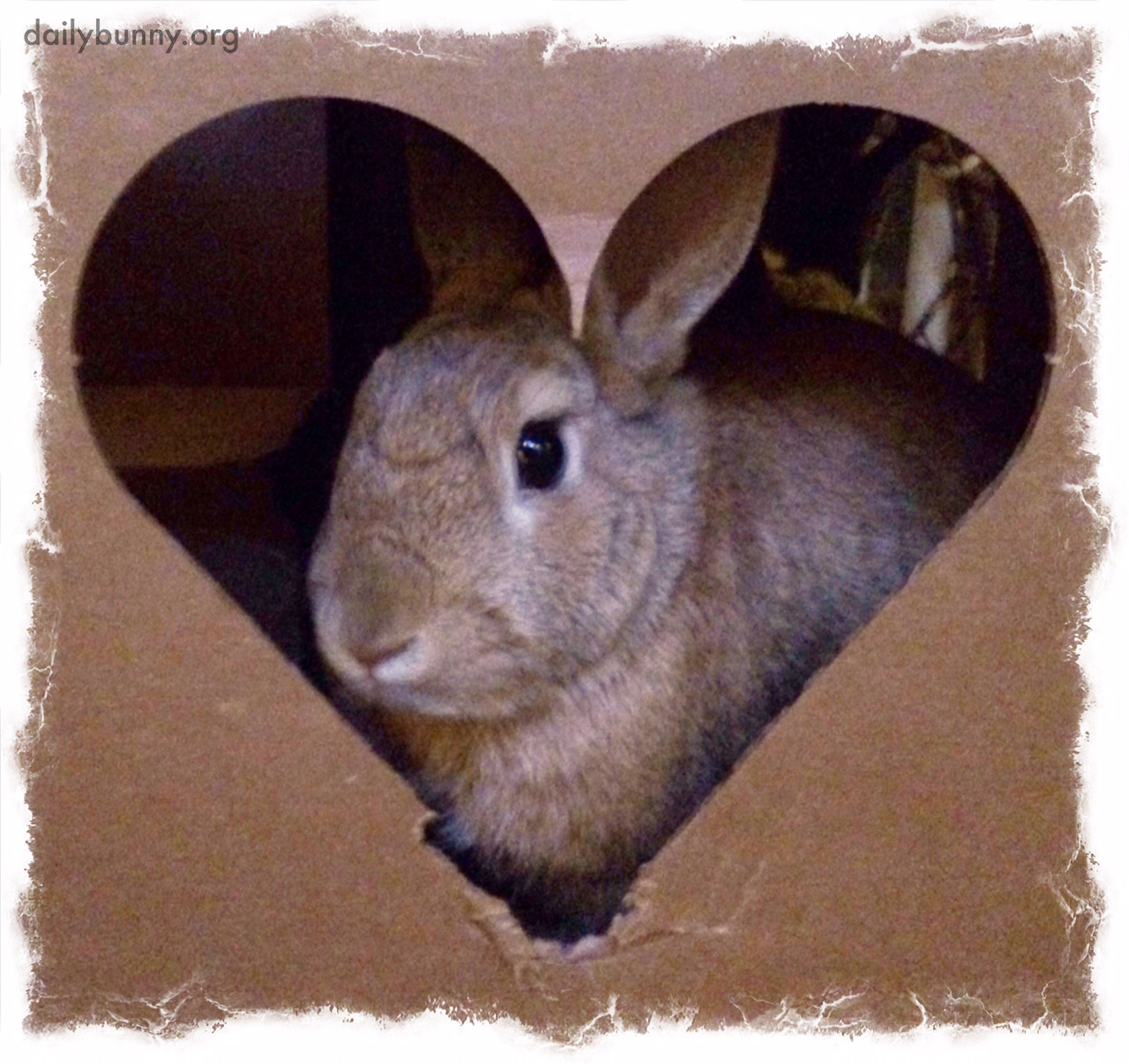 Valentine's Day Roundup: Bunny Edition 1