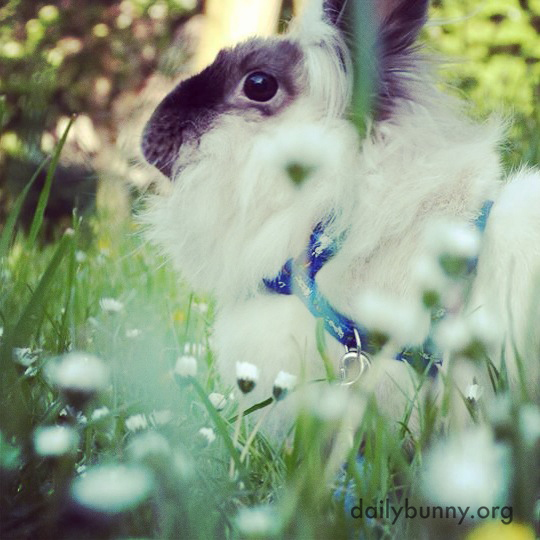Bunny Gets Some Fresh Spring Air