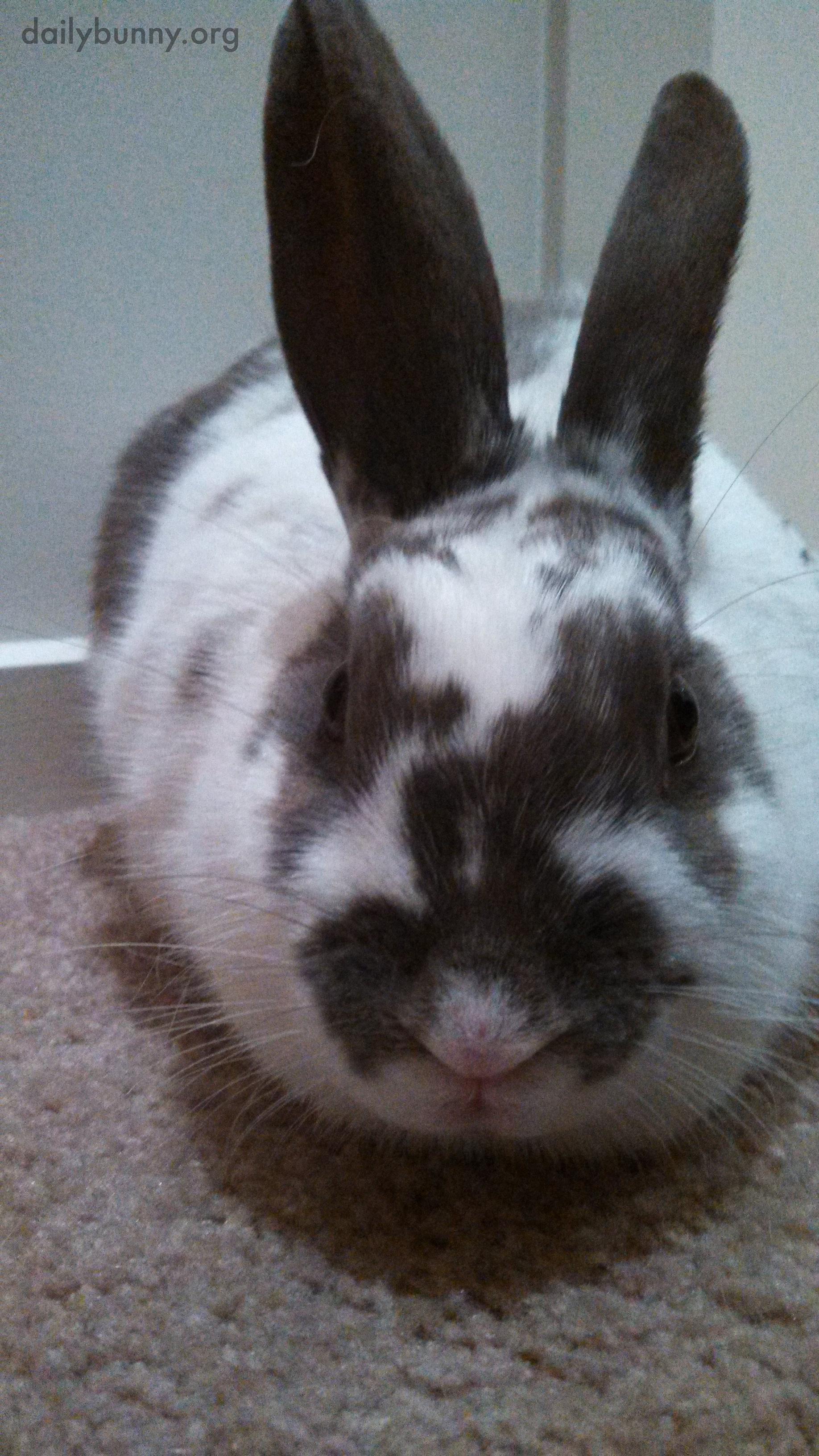 Bunny Has Had Enough of These Photos Already 1