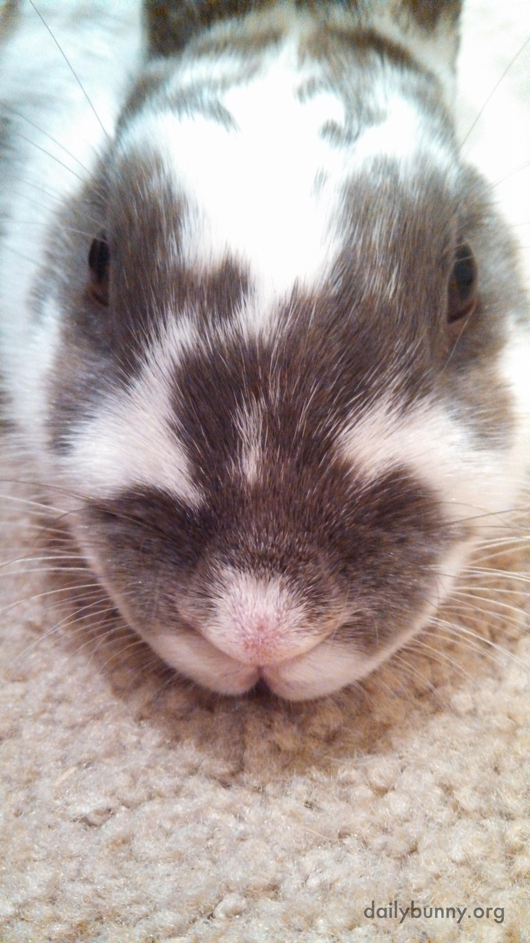 Bunny Has Had Enough of These Photos Already 2