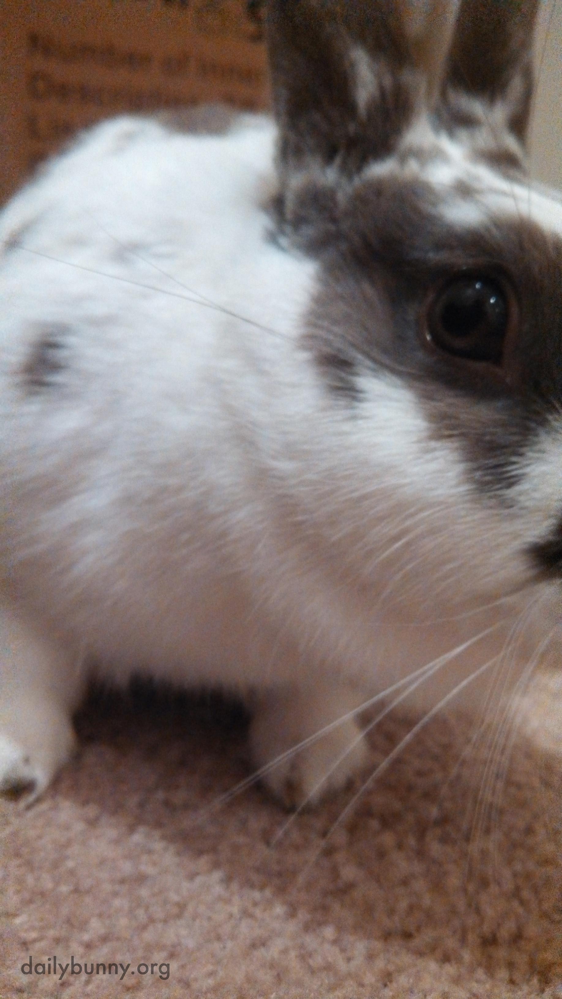 Bunny Has Had Enough of These Photos Already 3