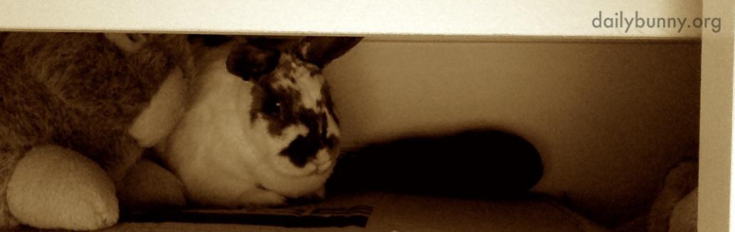 Bunny Has Had Enough of These Photos Already 4
