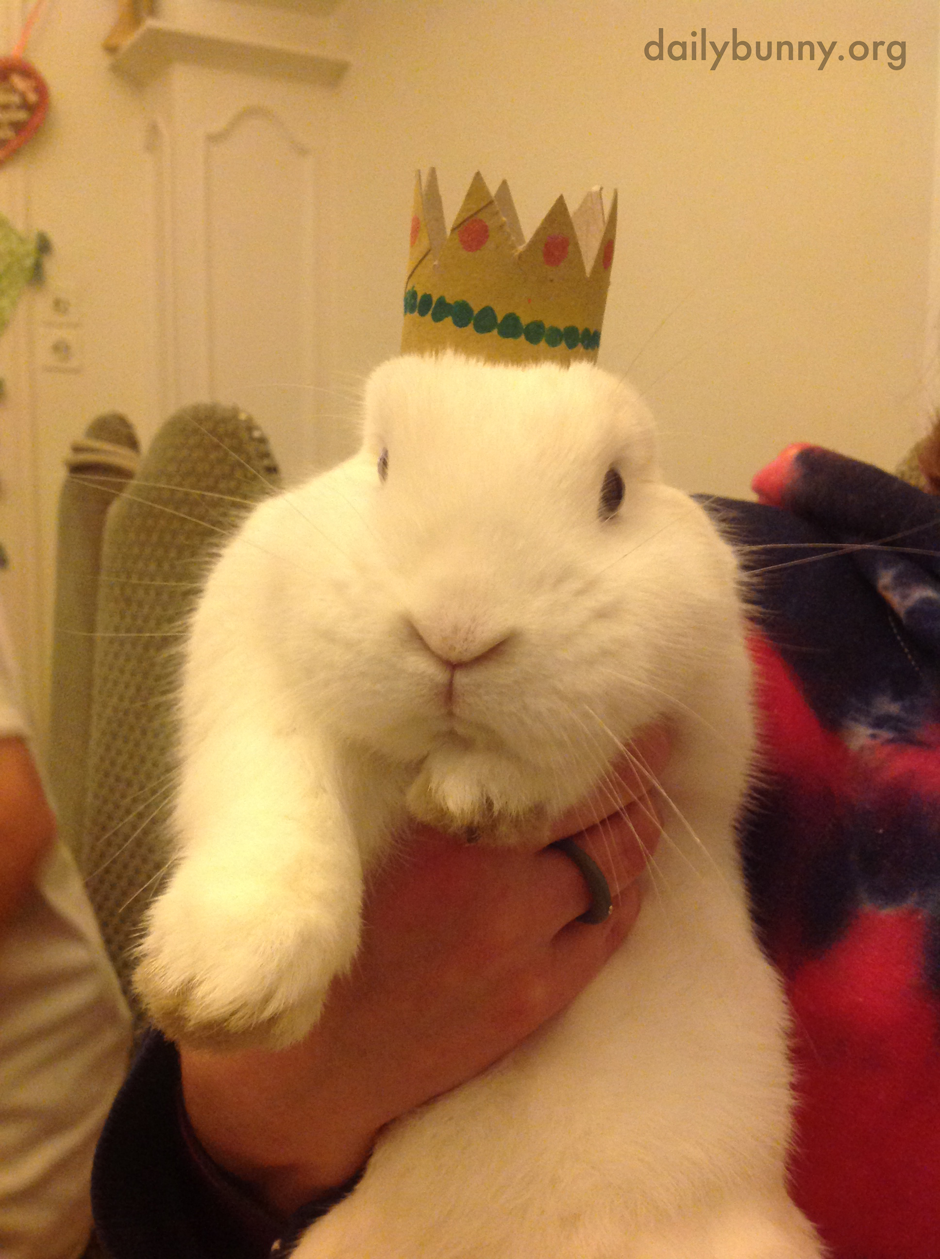 Bunny Is King of the Castle