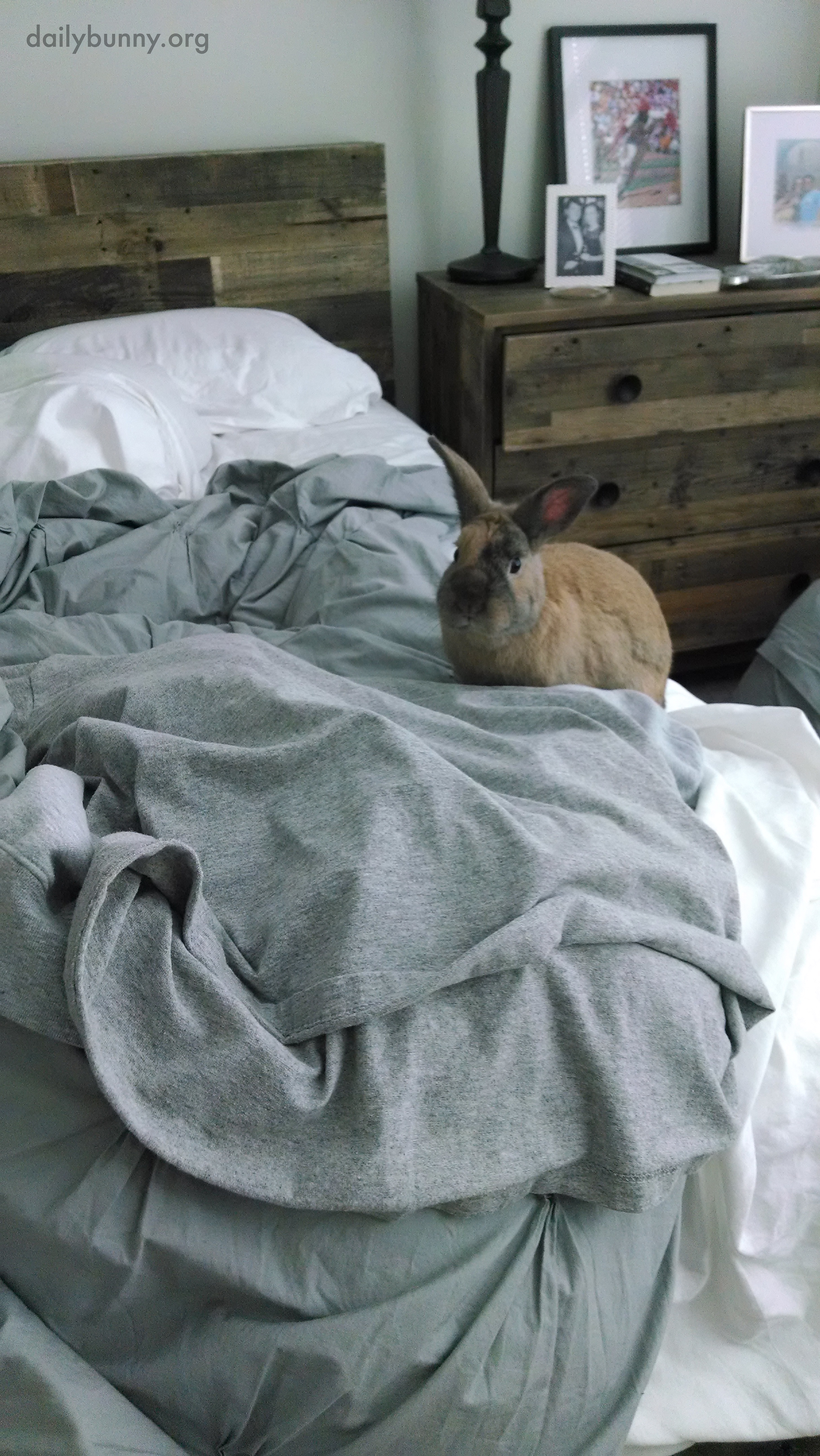 Bunny Is Ready for a Languid Morning Full of Cuddles - So Get Back in the Bed, Human! 1