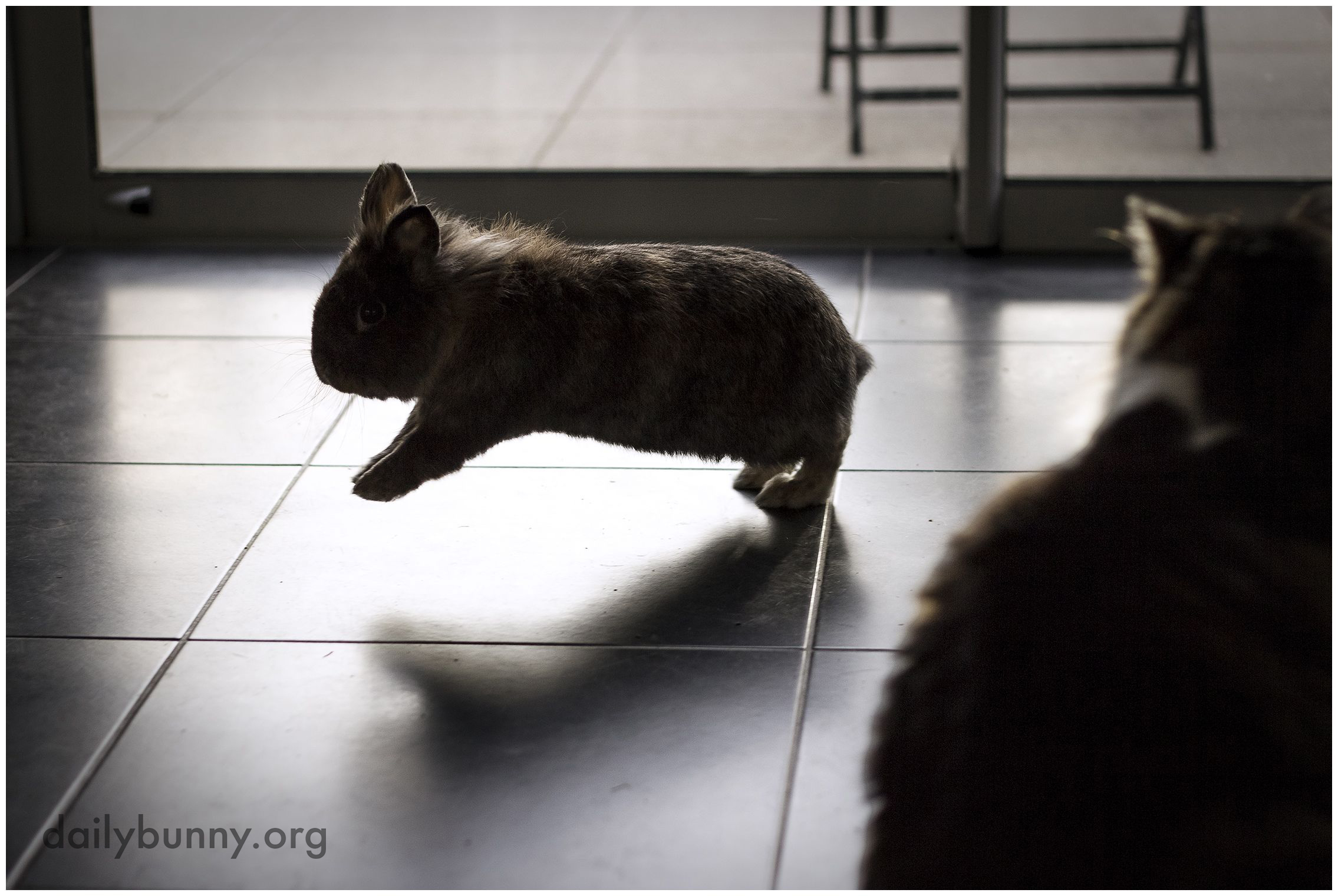 Bunny Shows the Cat How Hopping Is Done