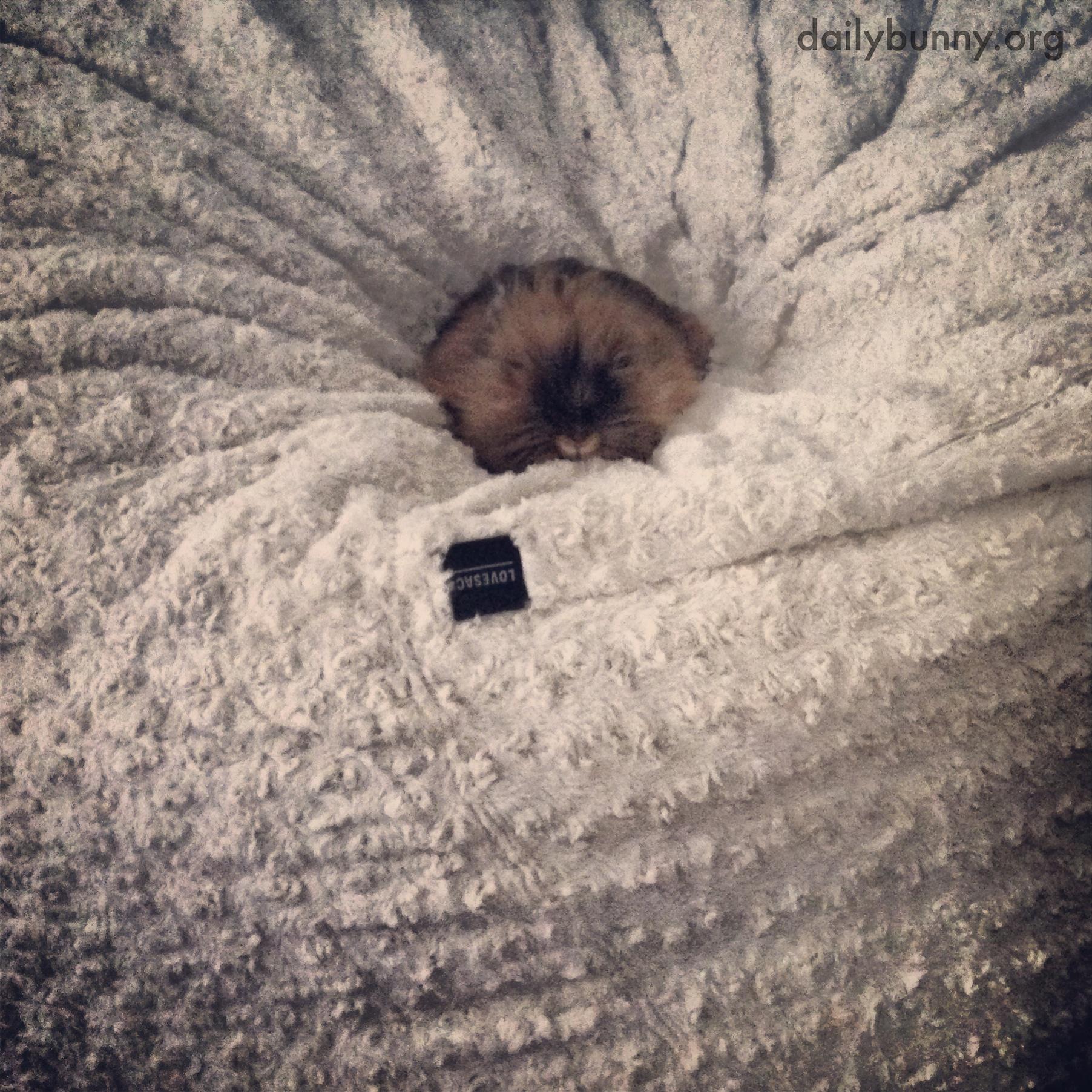 Bunny Sinks into a Beanbag for a Snug, Cozy Nap