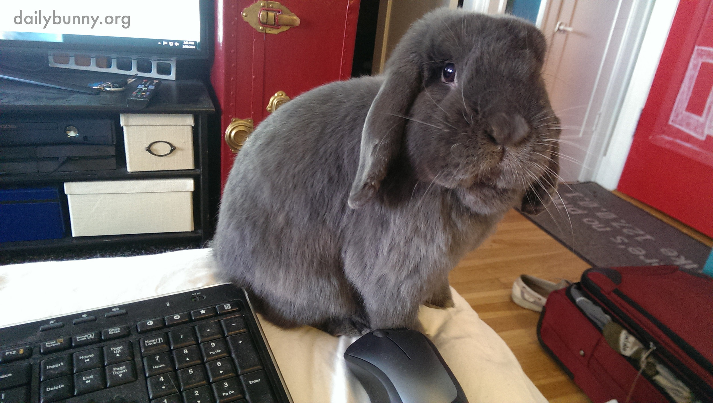 Bunny Thinks Working from Home Should Involve Frequent Treat Breaks