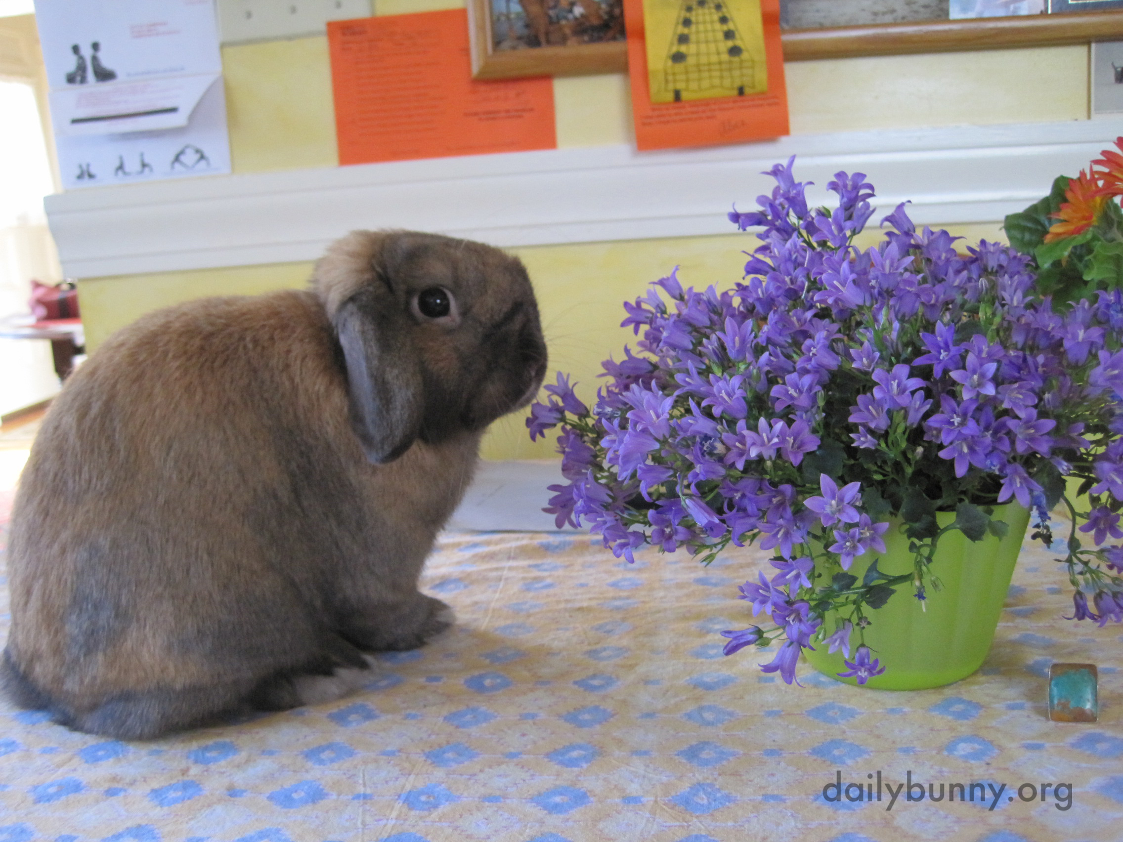 Bunny Tries to Hide Behind the Flowers After Being Caught on the Table 1