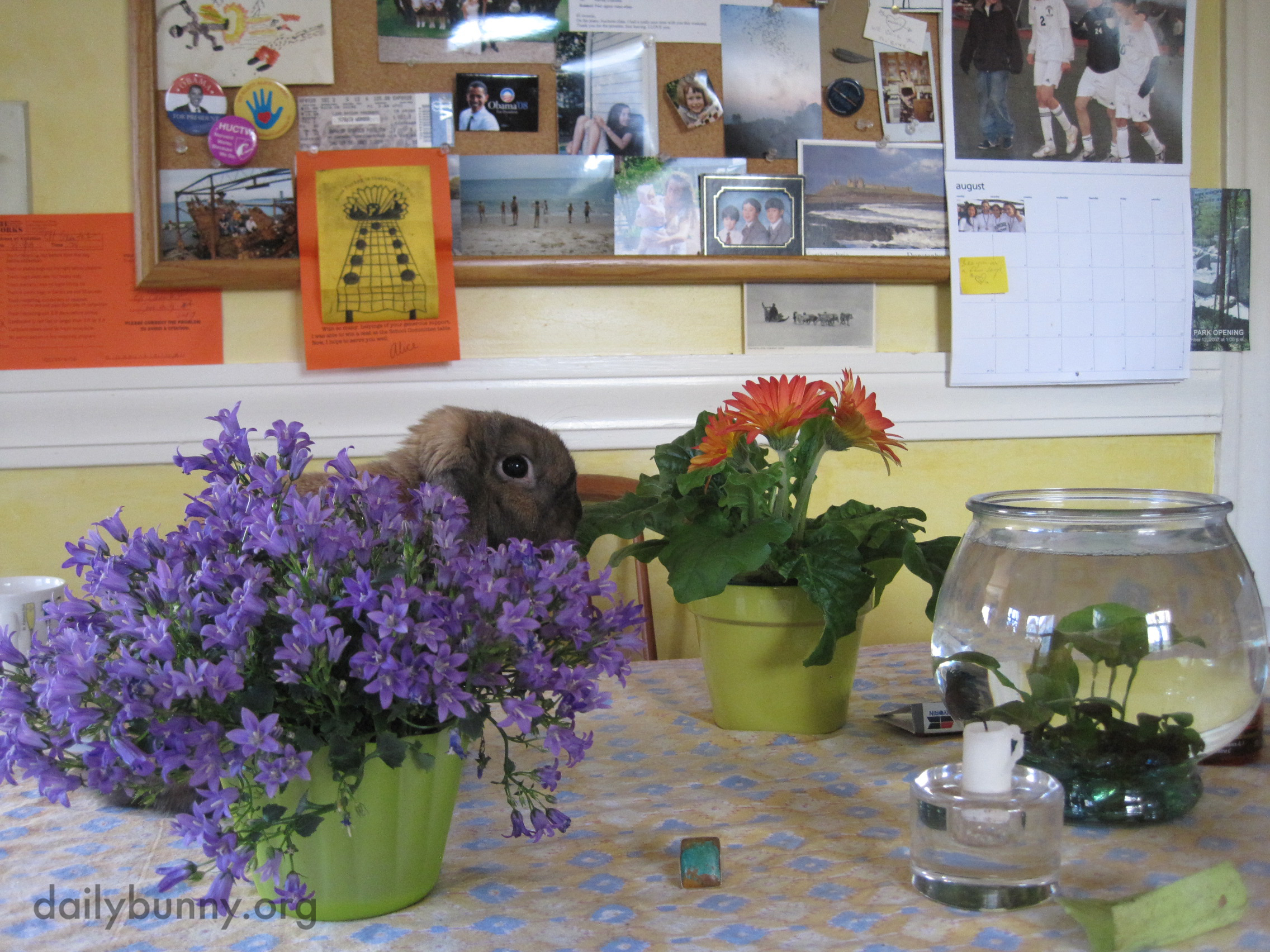 Bunny Tries to Hide Behind the Flowers After Being Caught on the Table 2
