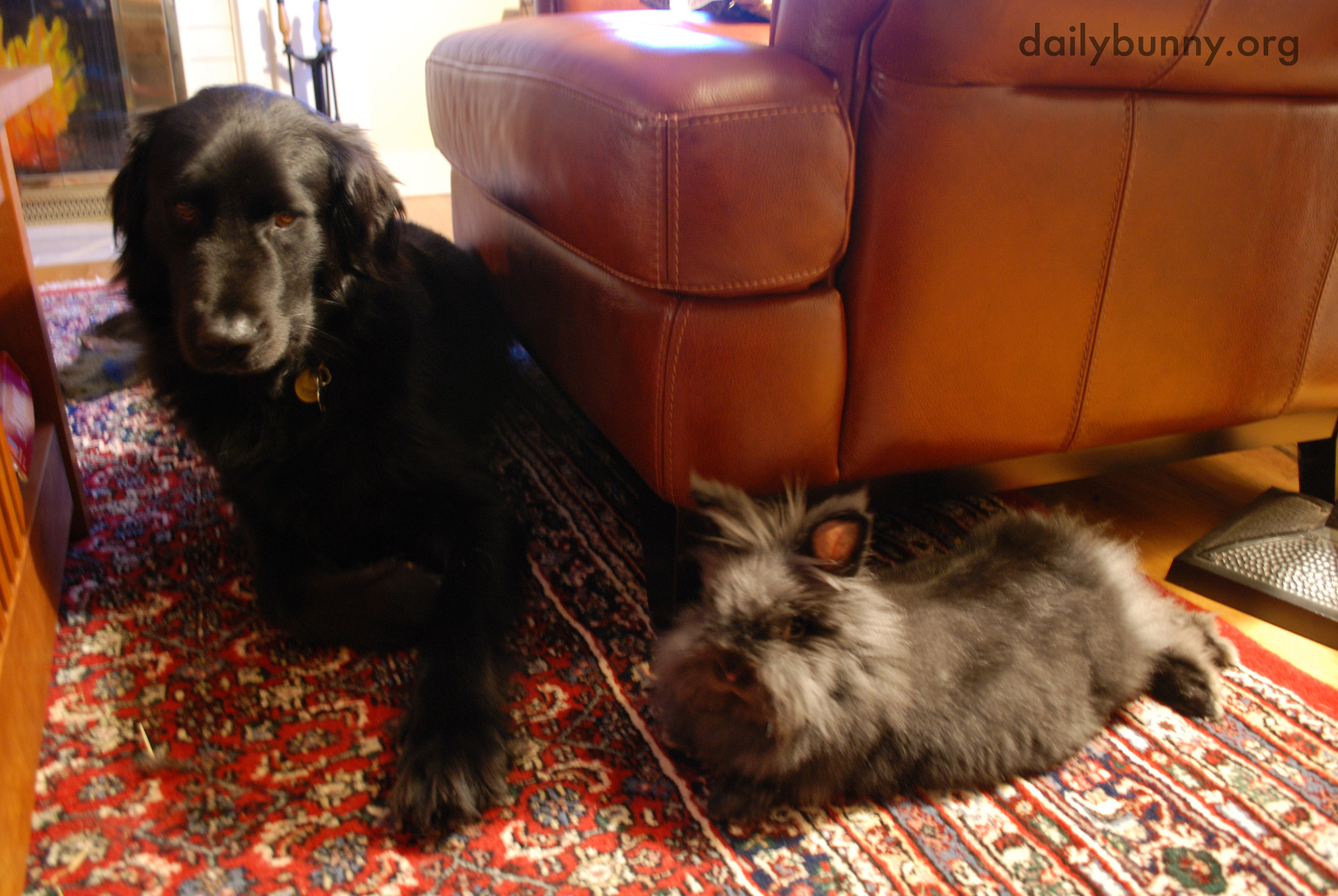 Bunny and His Dog Friend Retire to the Living Room to Relax and Socialize