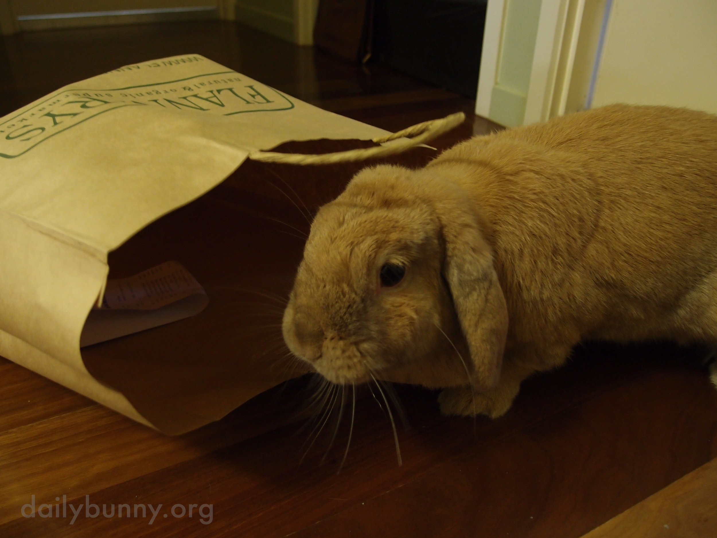 There's Always Another Use for Paper Bags When You Have a Bunny 1