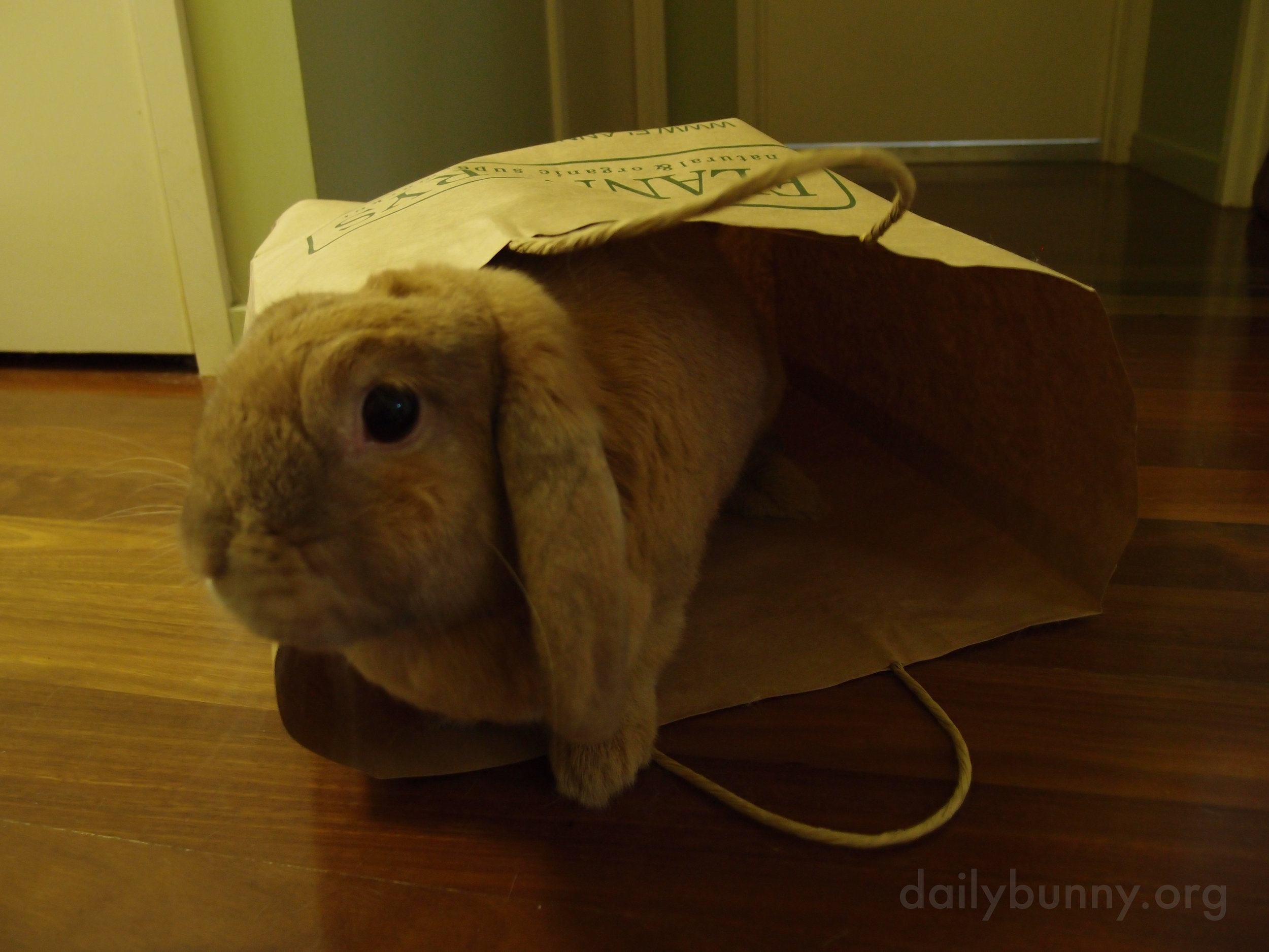 There's Always Another Use for Paper Bags When You Have a Bunny 2