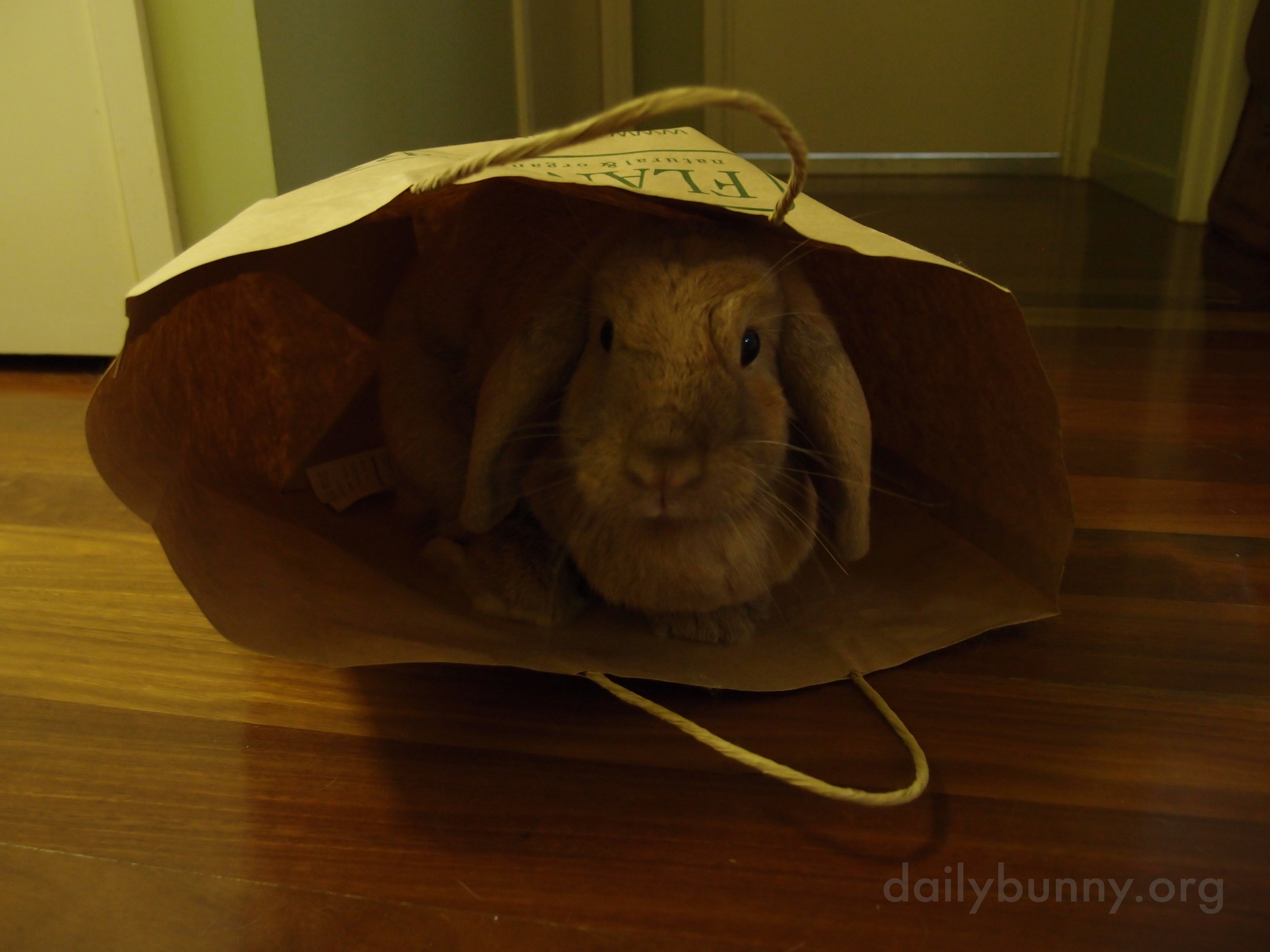 There's Always Another Use for Paper Bags When You Have a Bunny 3