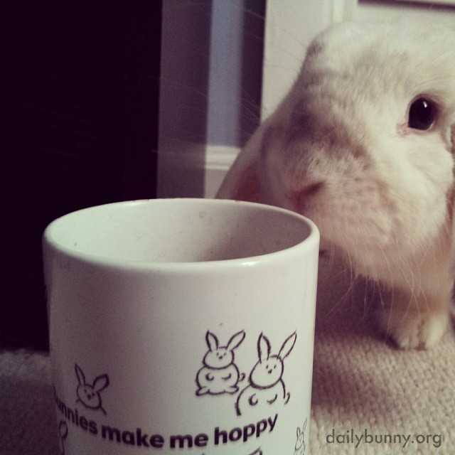 What's That About Bunnies, Human?