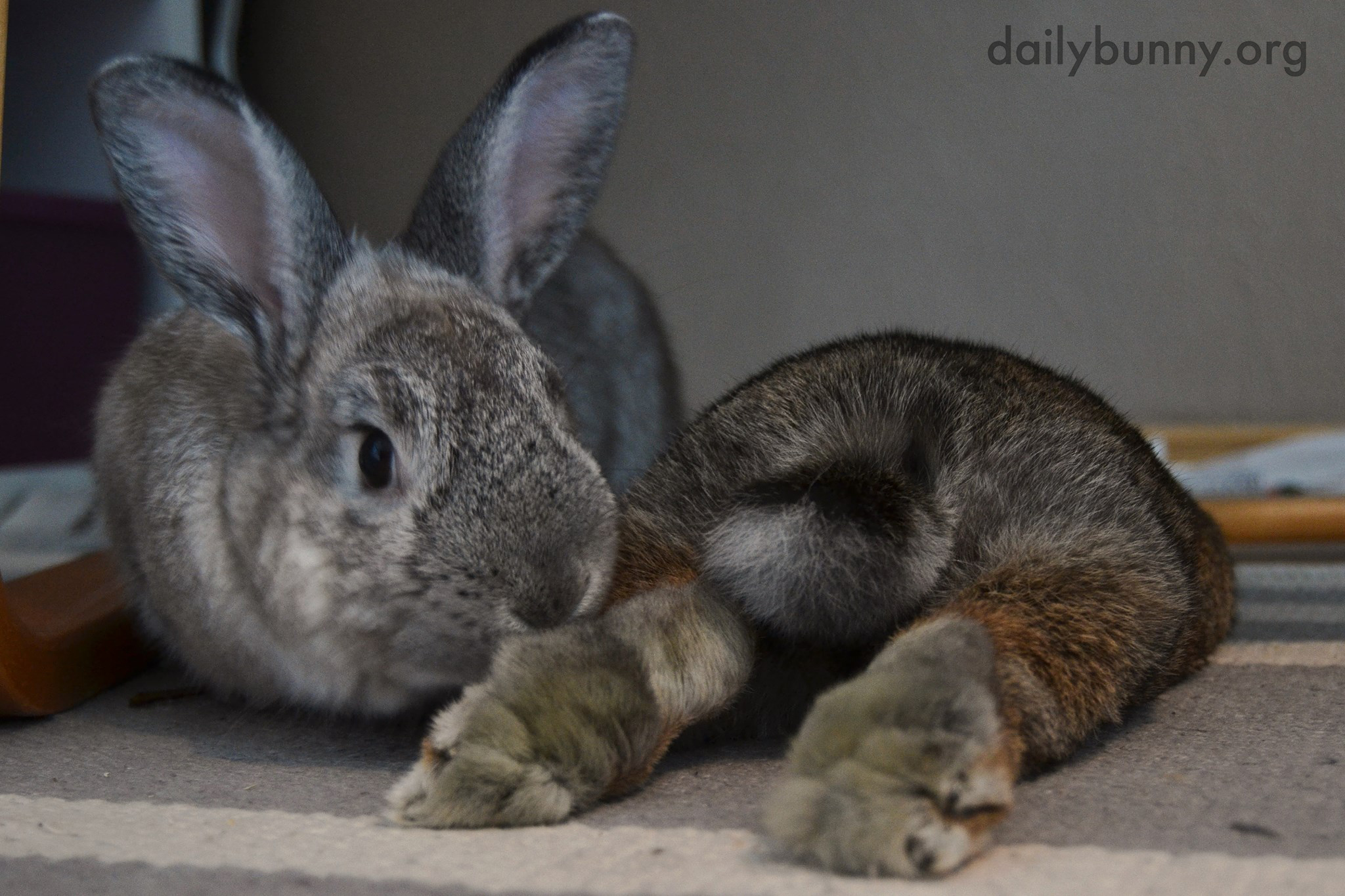 Your Feet Smell Good - Have You Been Stepping on the Parsley Again?