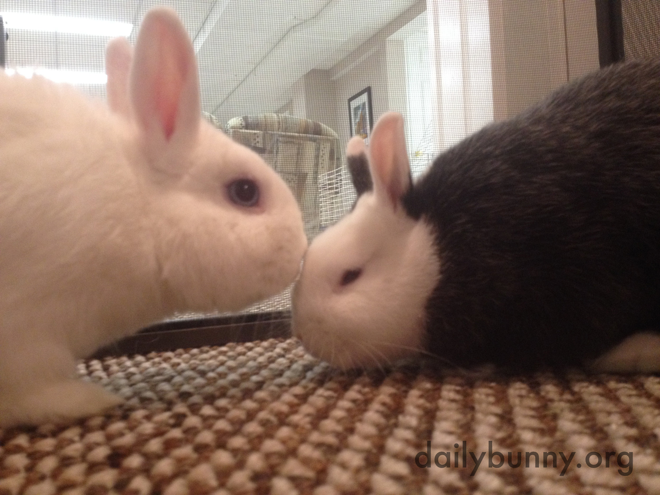 Bonding Bunnies Practice Kisses and Snuggling 1