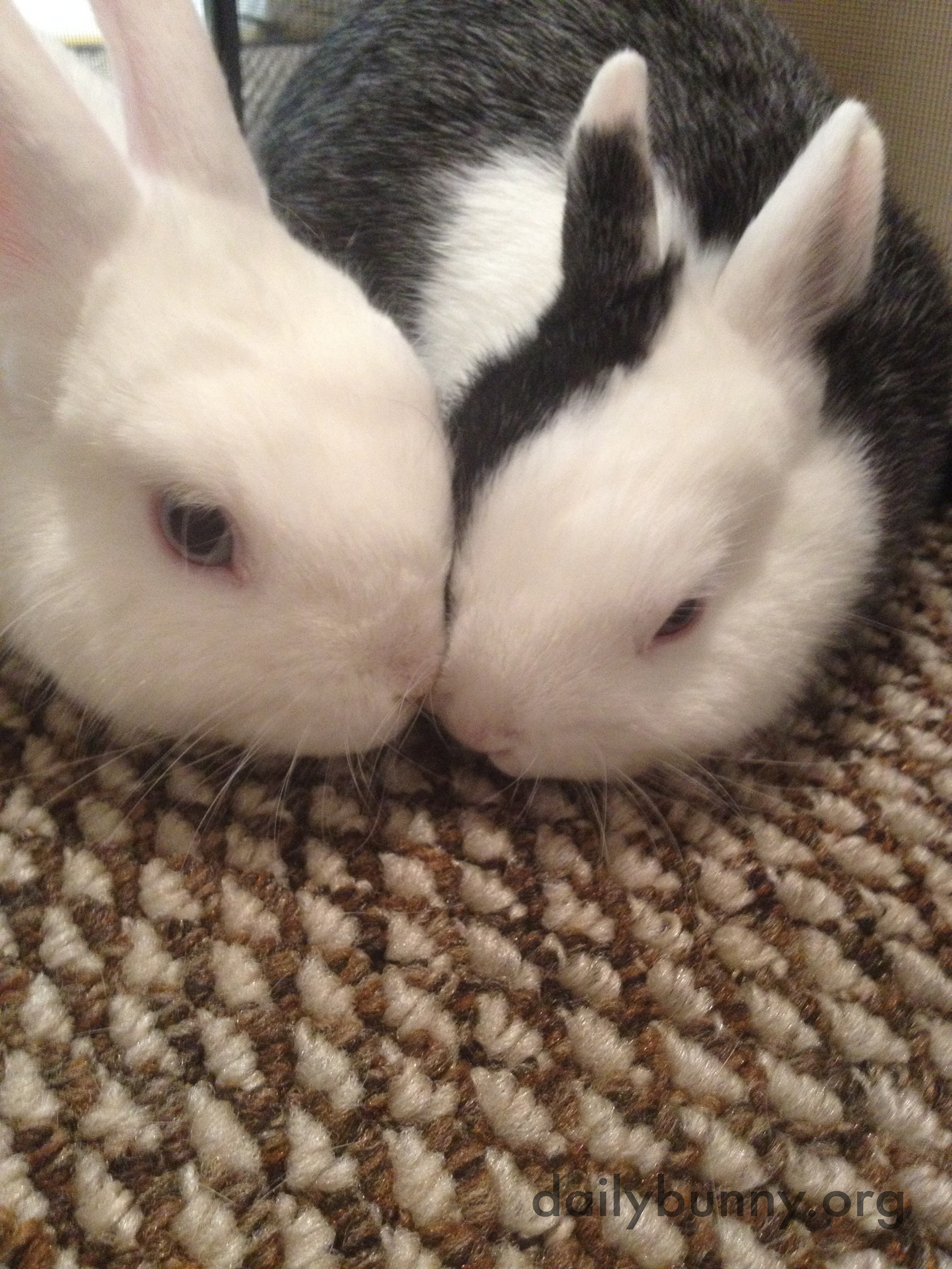 Bonding Bunnies Practice Kisses and Snuggling 2