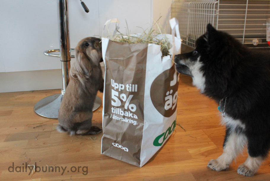Bunnies Show the Dog the Benefits of a Plant-Based Diet 2
