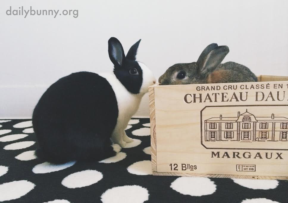 Bunny Gets a Personalized Crate to Play In 2
