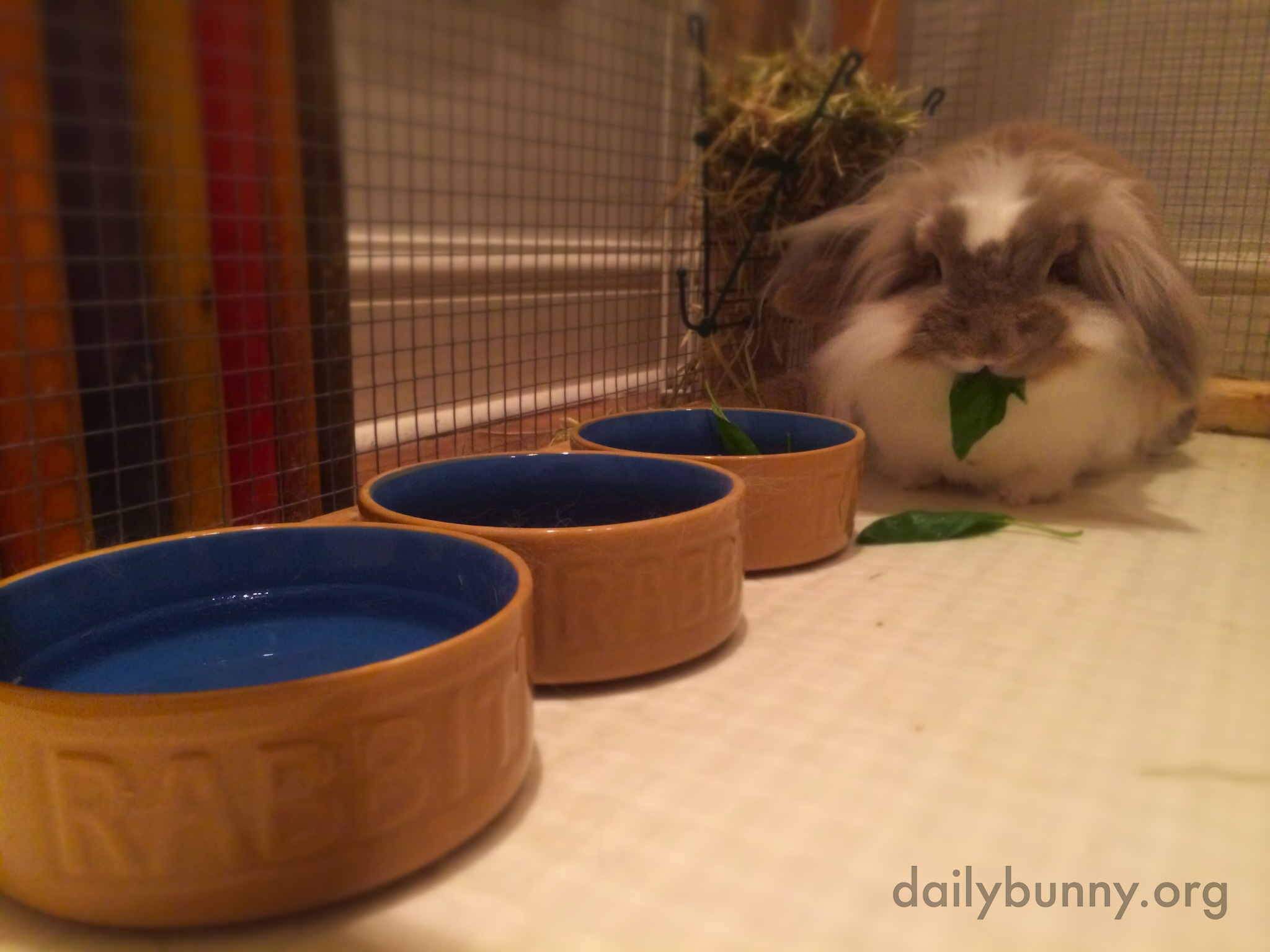 Bunny Has a Buffet All to Herself