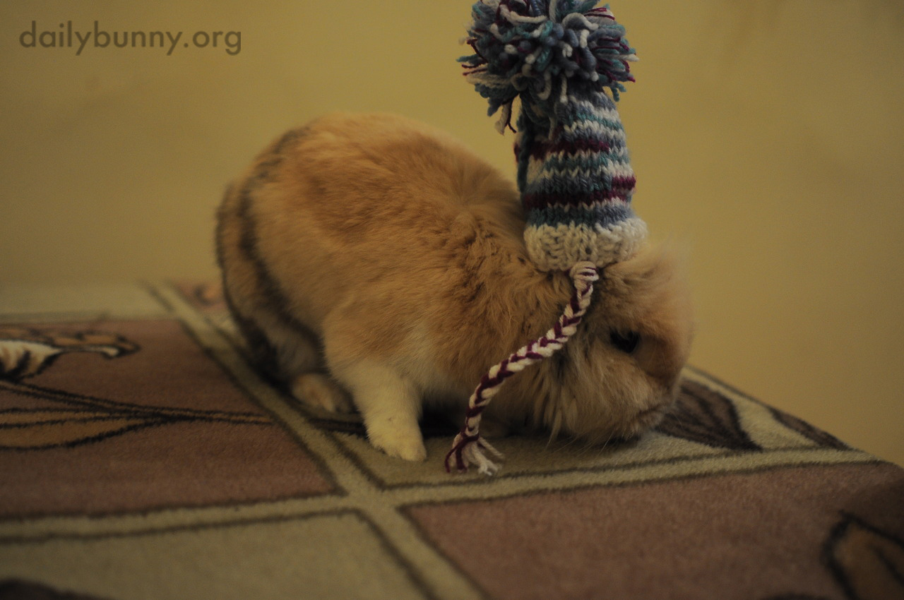 Bunny Hopes It's Not Too Warm Yet to Wear His Special Pom Pom Hat