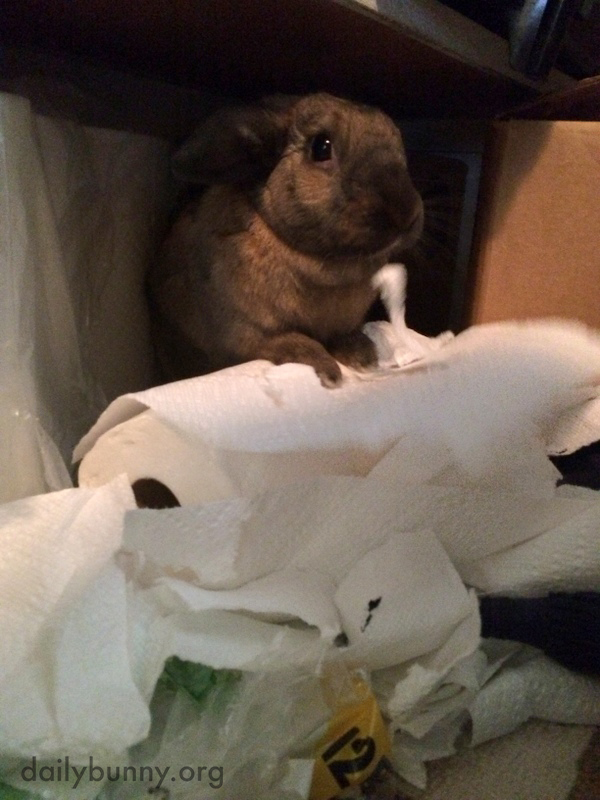 Bunny Is Caught in the Act of Tearing Up a Roll of Paper Towels