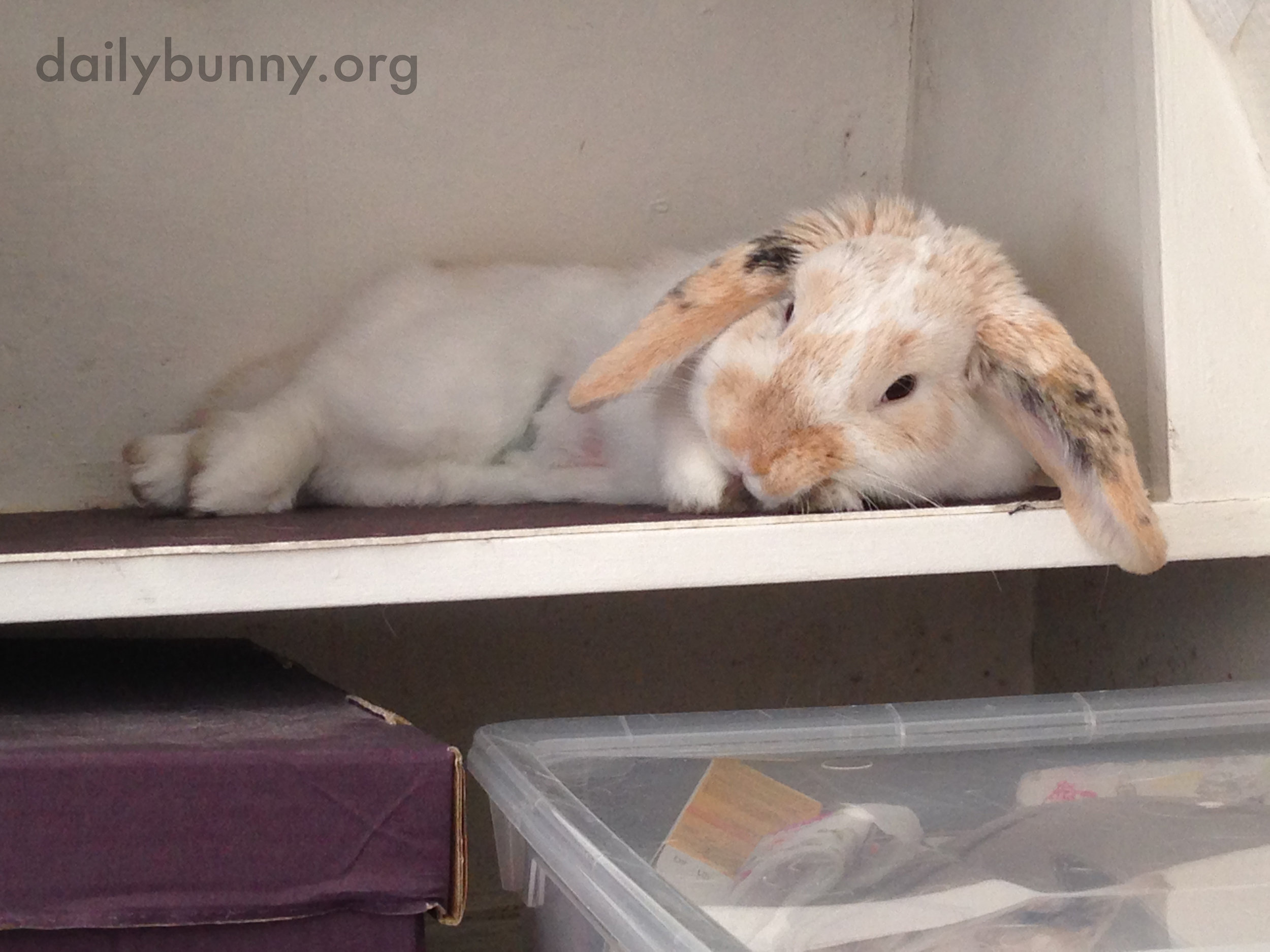 Bunny Is an Expert at Relaxation 2