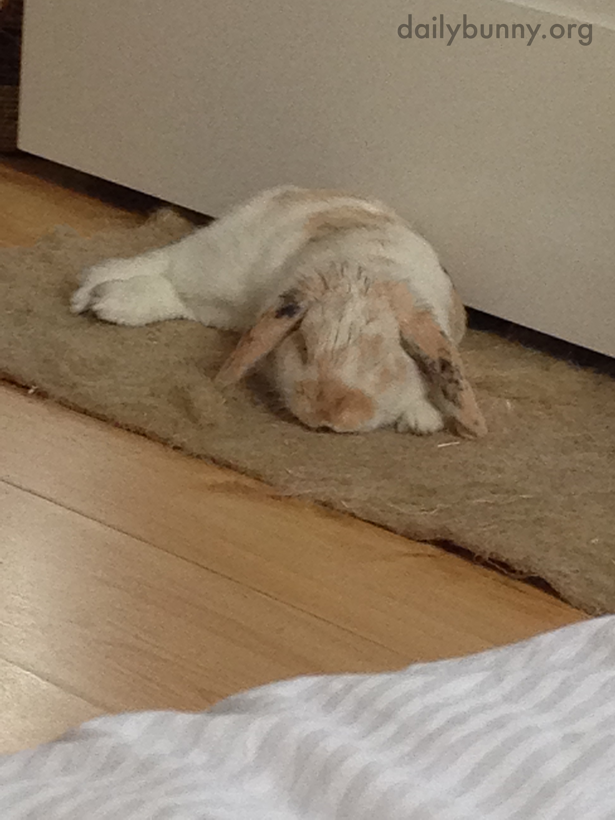 Bunny Is an Expert at Relaxation 3