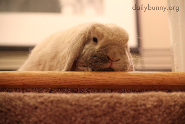 Bunny Isn't Sure That He Wants to Try the Stairs