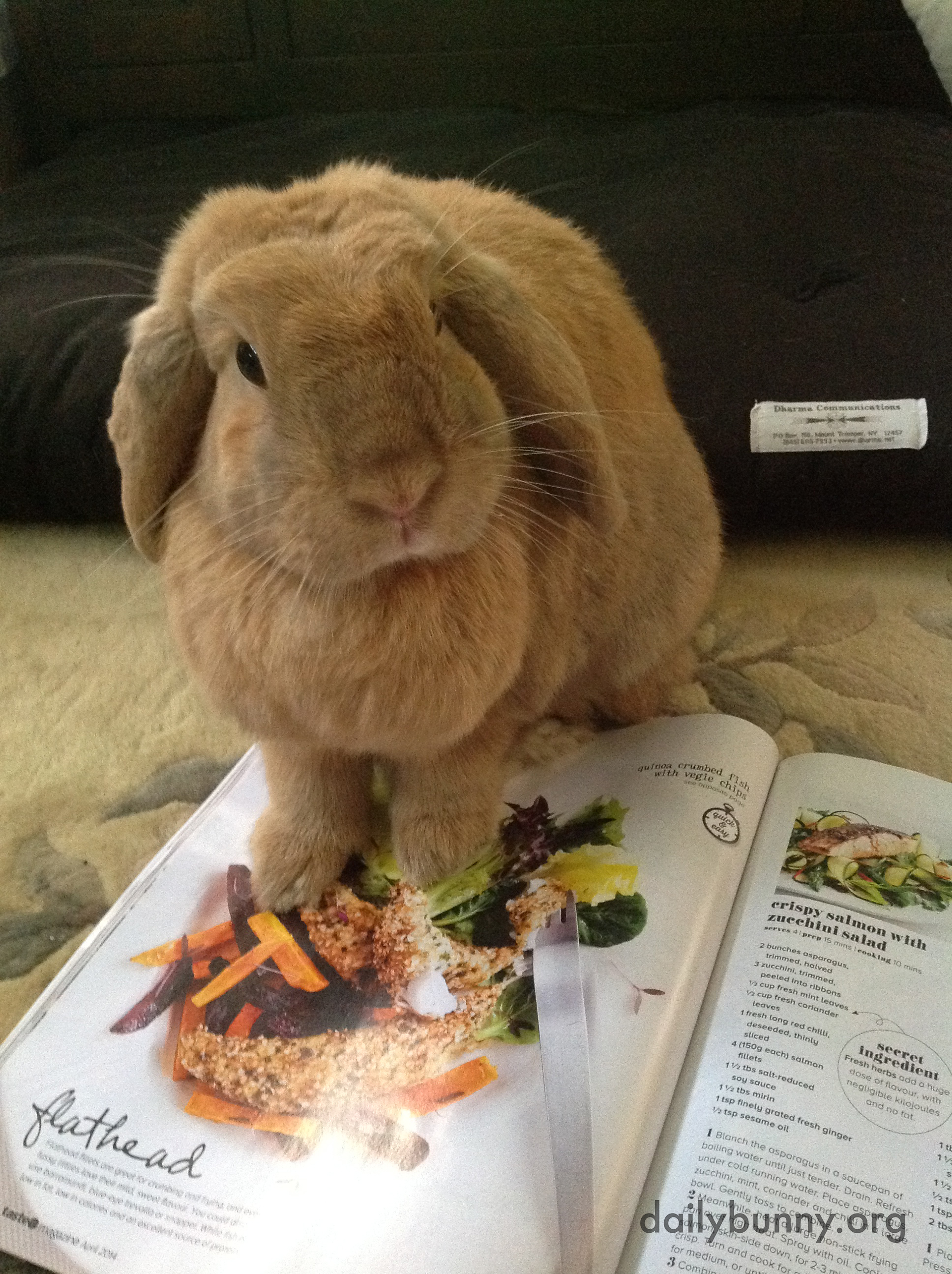 Bunny Picks Out the Salad She Wants for Dinner