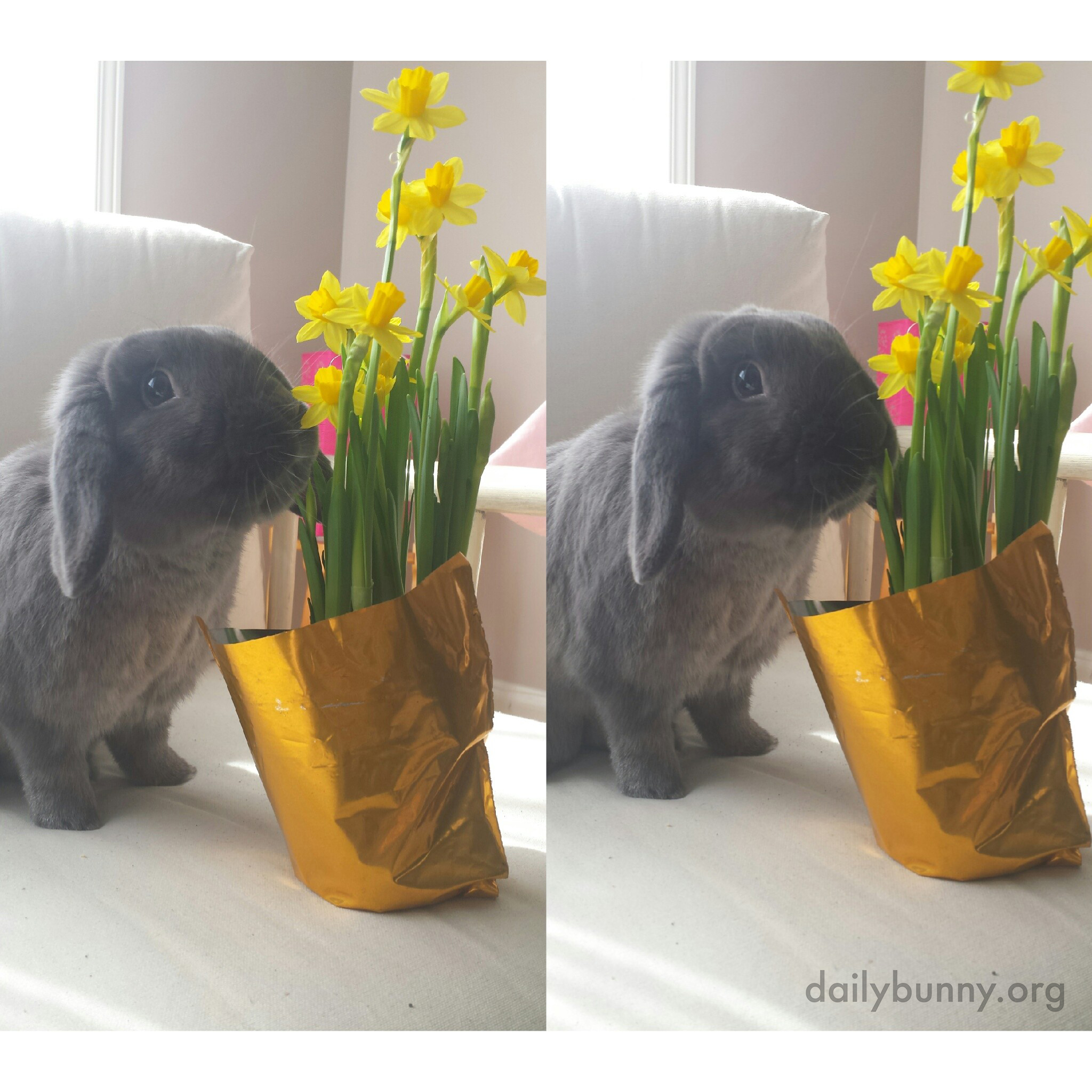 Bunny Thinks Flowers Are Nice, But They're Better When They're Edible