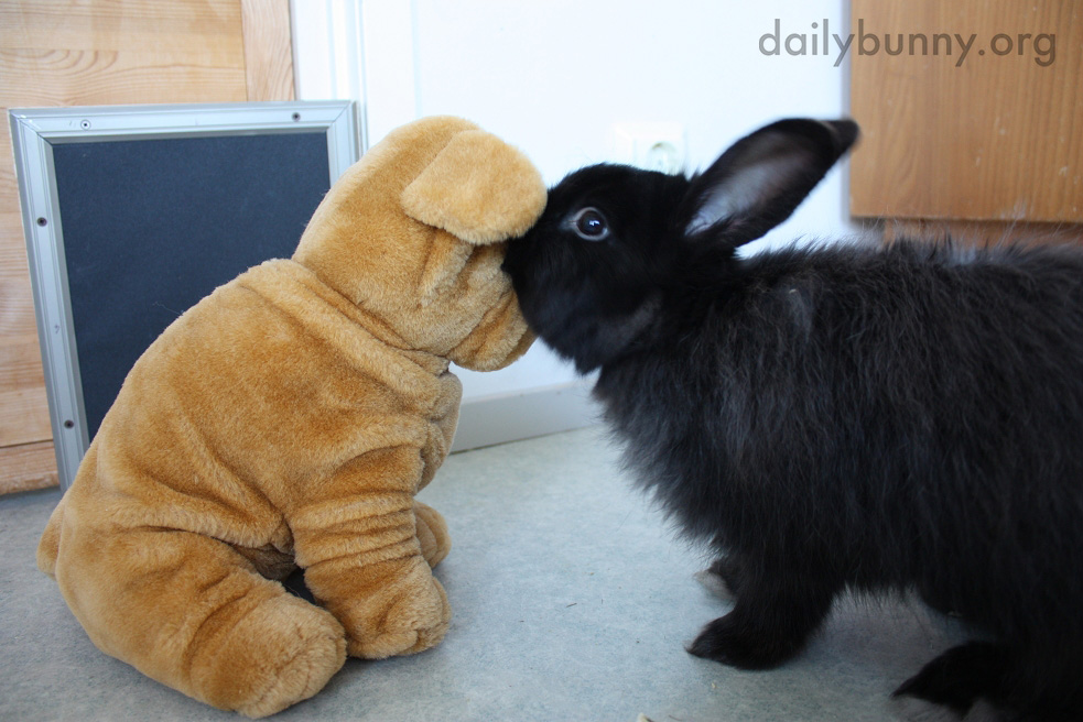 Bunny Whispers Secrets in a Plush Friend's Ear 1