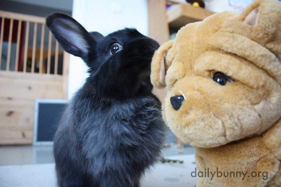 Bunny Whispers Secrets in a Plush Friend's Ear 2