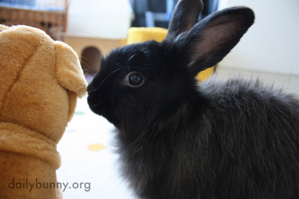 Bunny Whispers Secrets in a Plush Friend's Ear 3