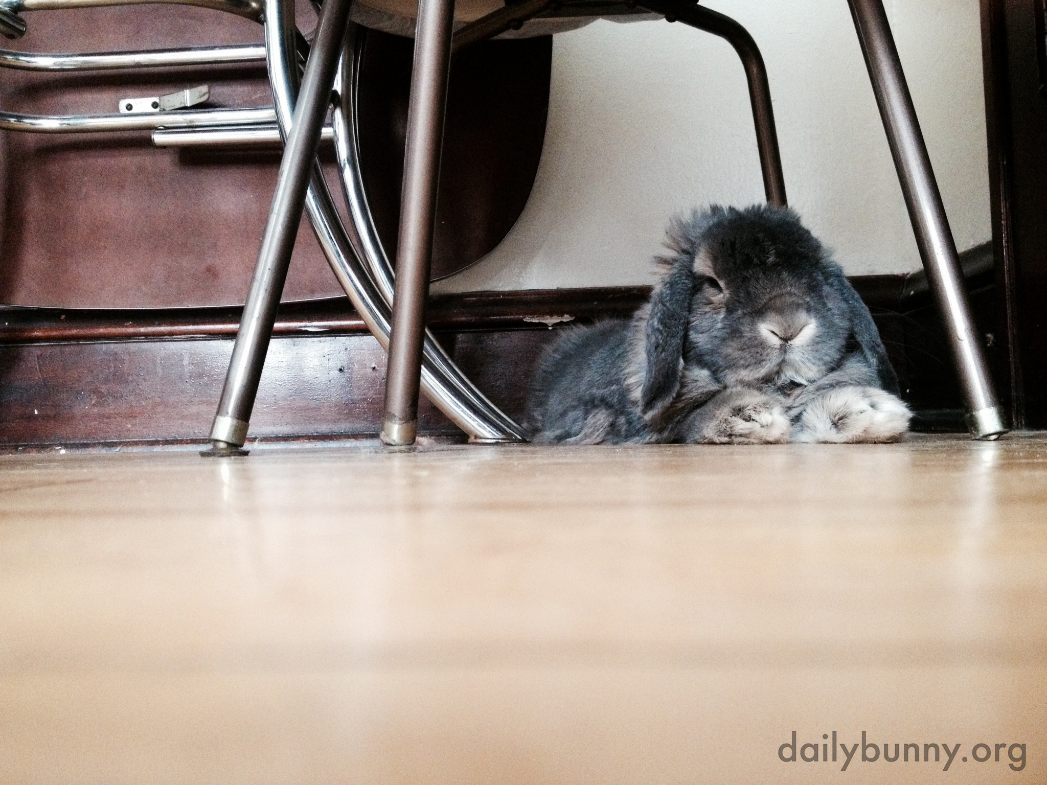 Grumpy Bunny Just Wants a Nap