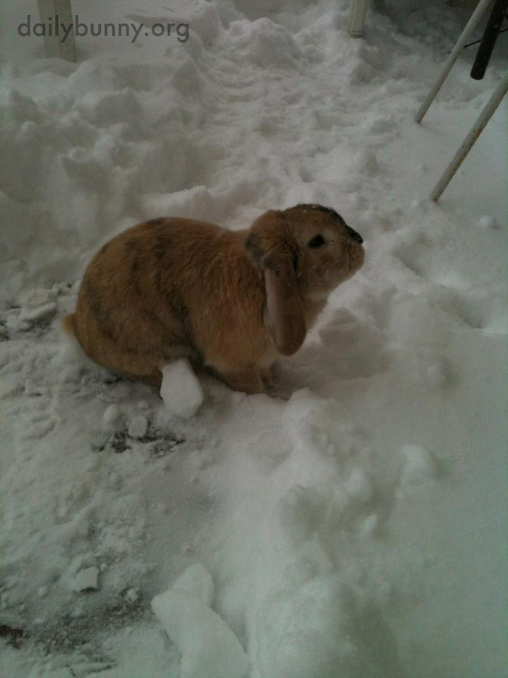 It's Bunny's Last Chance This Year to Play in Snow