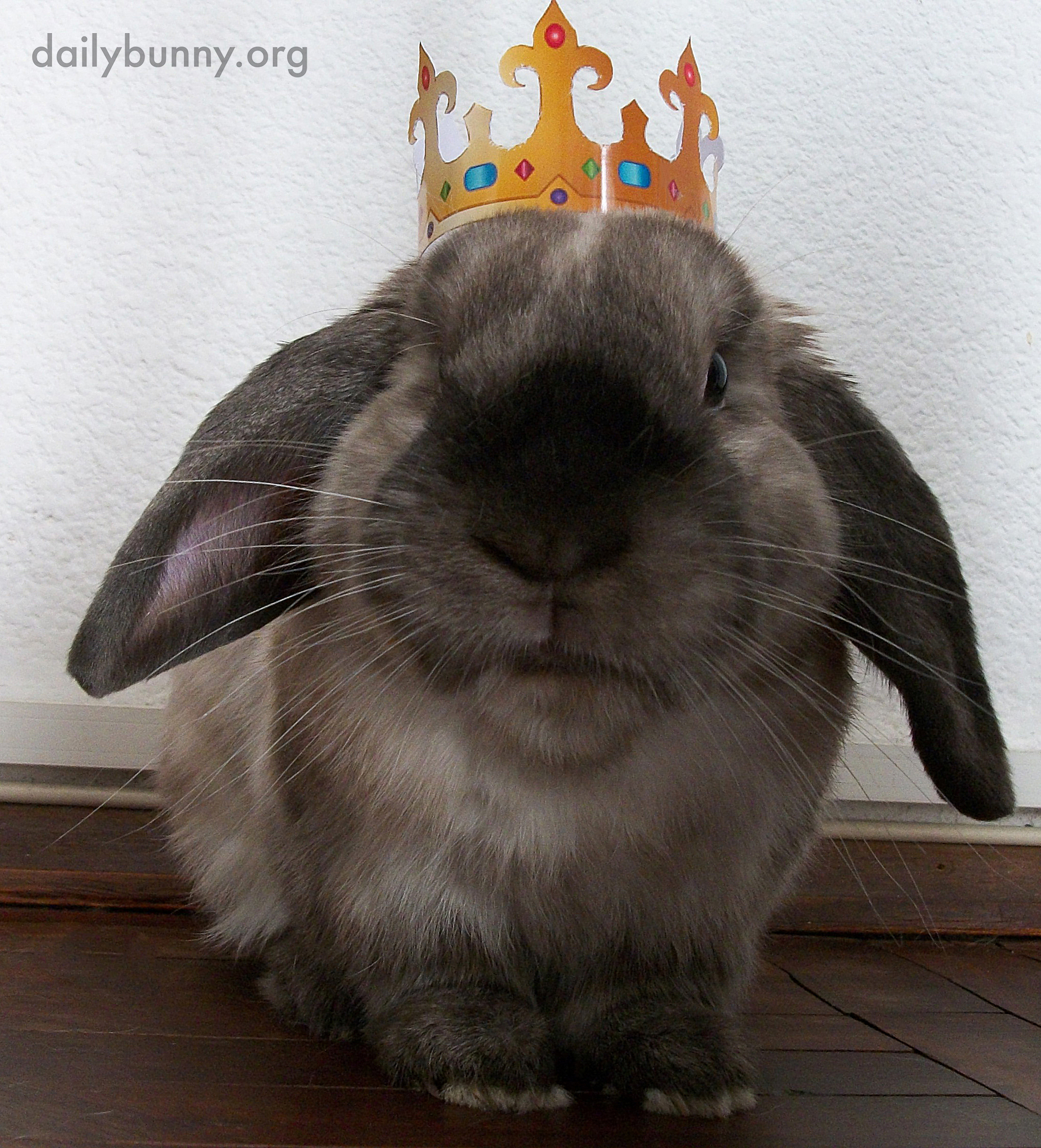 On His Birthday, All Bow to King Bunny