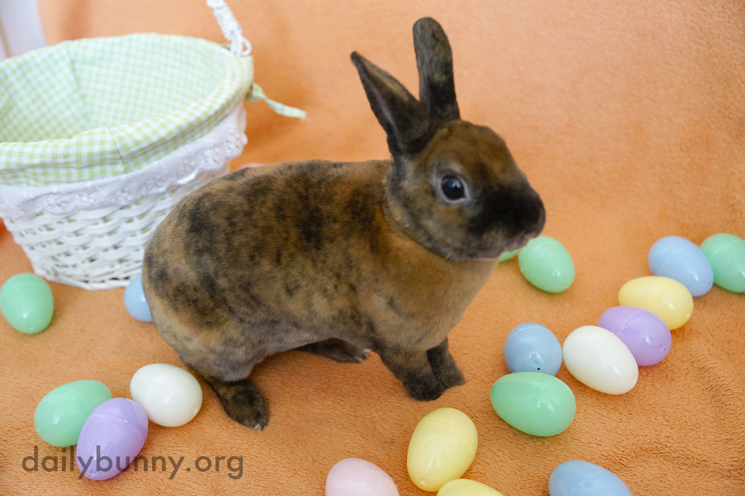 The Daily Bunny's Easter 2014 Mega-Post! 1