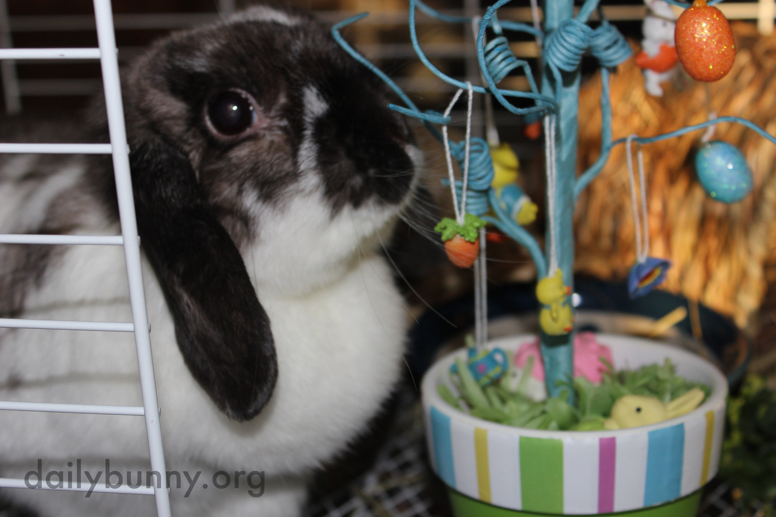 The Daily Bunny's Easter 2014 Mega-Post! 10