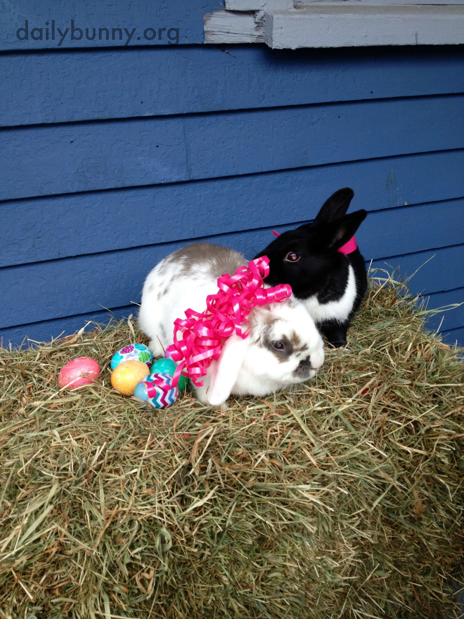 The Daily Bunny's Easter 2014 Mega-Post! 11