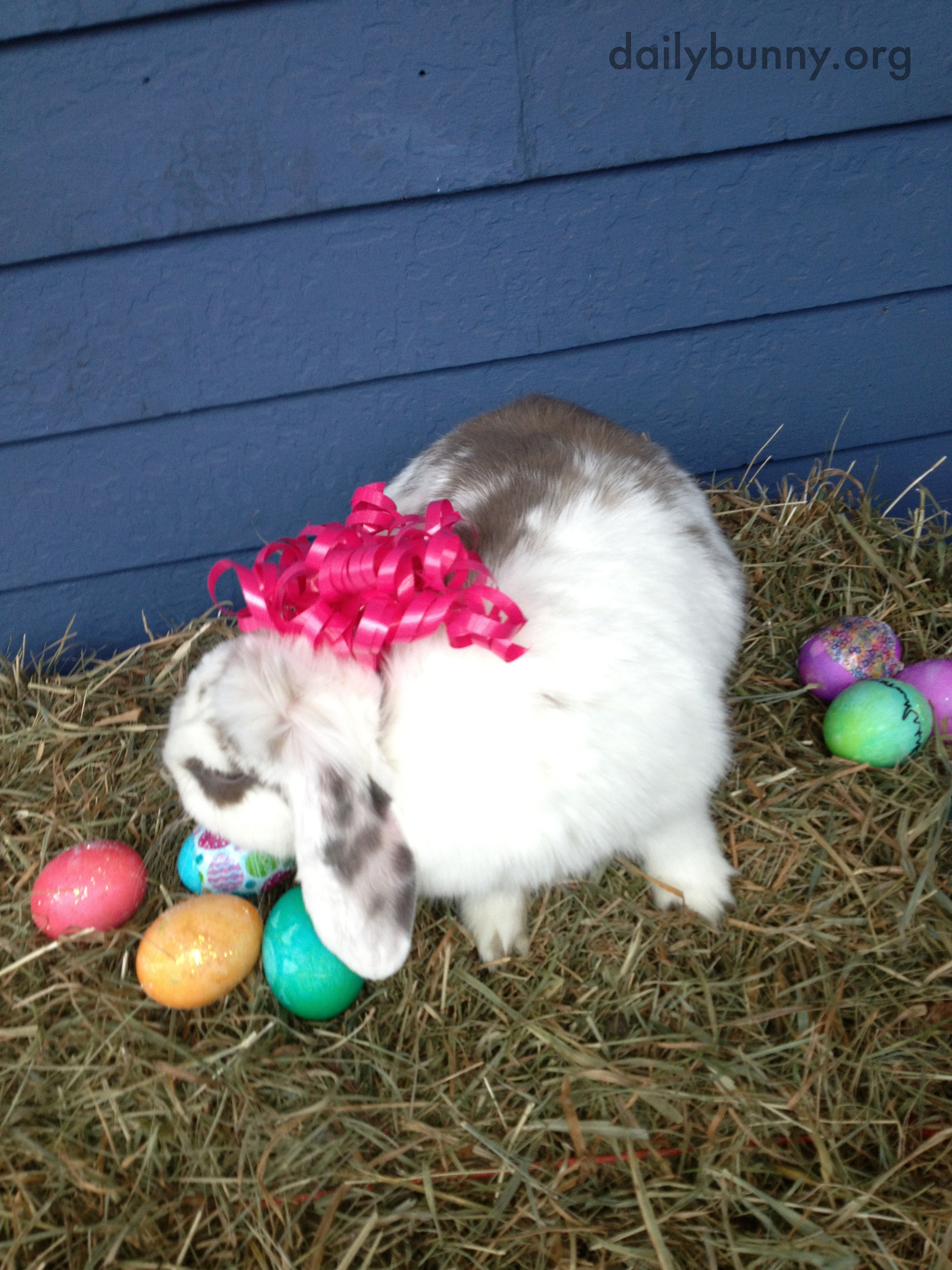 The Daily Bunny's Easter 2014 Mega-Post! 12