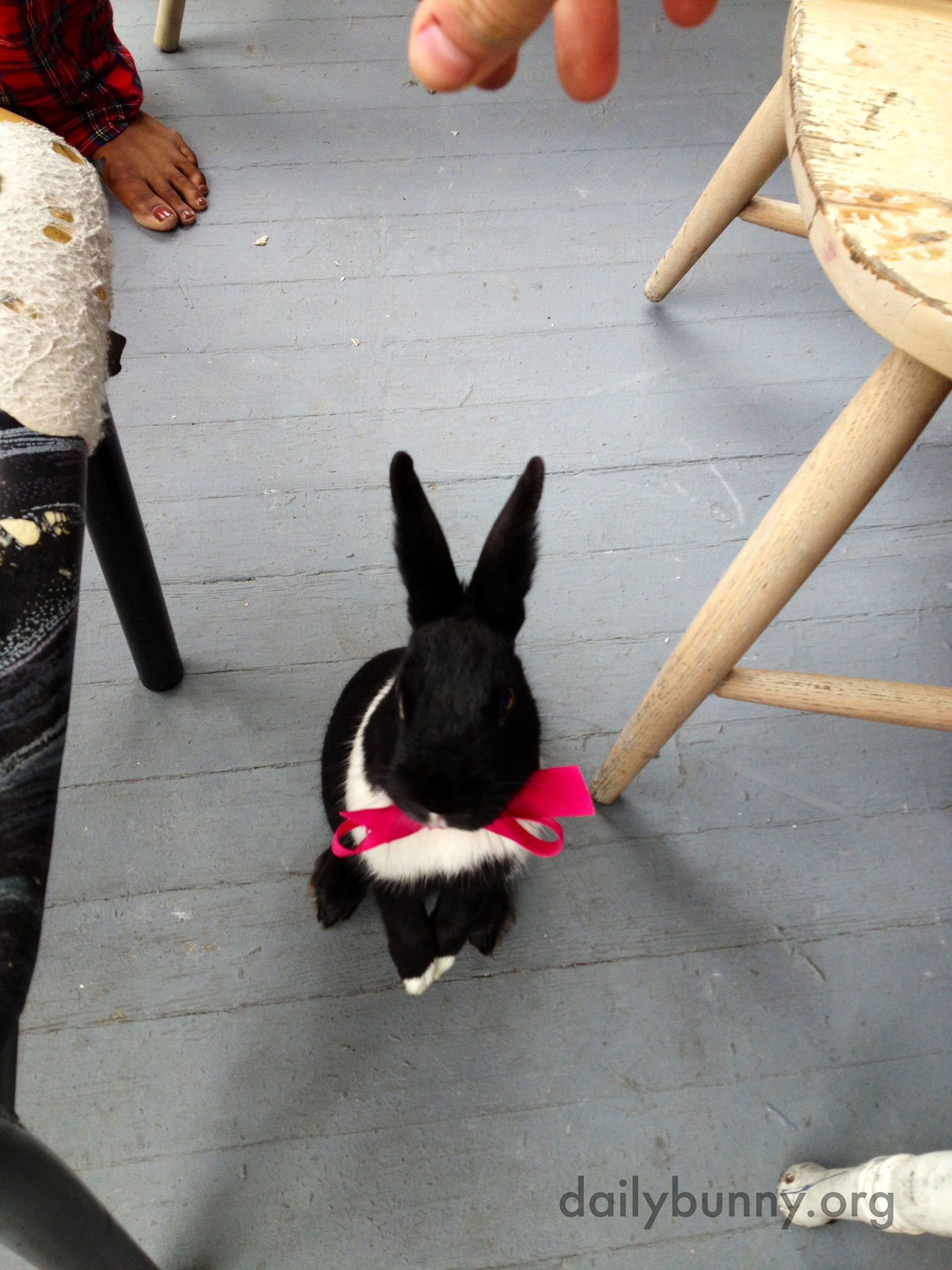 The Daily Bunny's Easter 2014 Mega-Post! 13