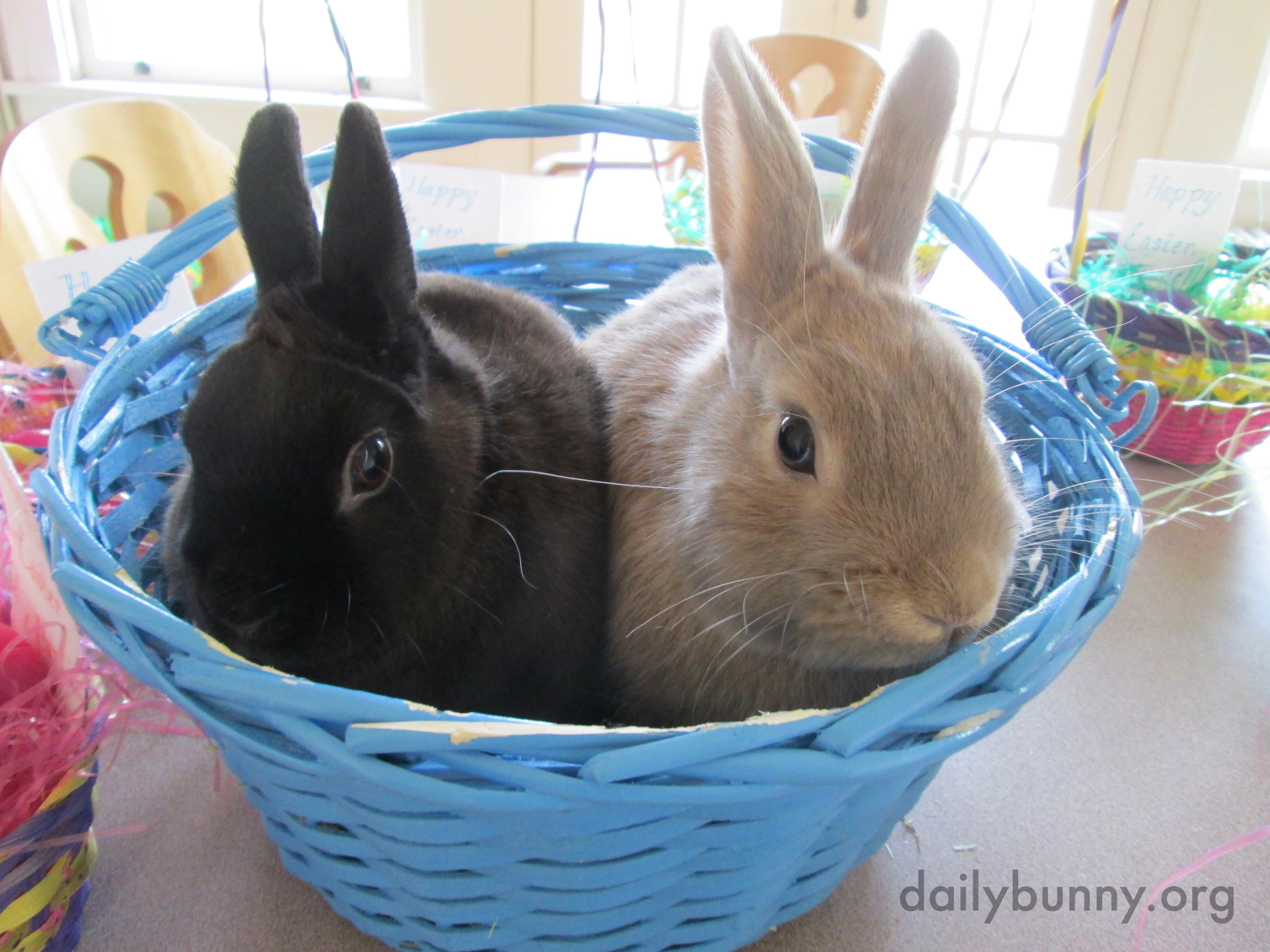 The Daily Bunny's Easter 2014 Mega-Post! 2
