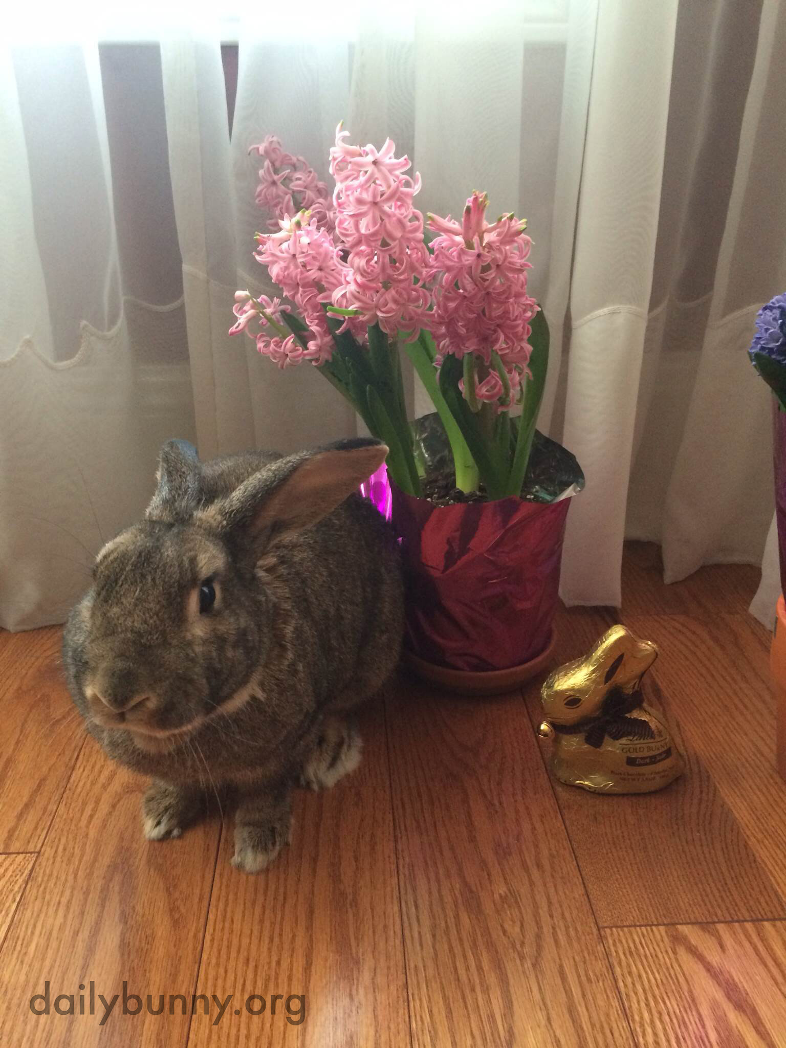 The Daily Bunny's Easter 2014 Mega-Post! 5