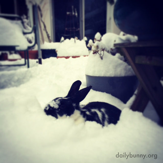 This Is Snow for a Bunny to Dig In!