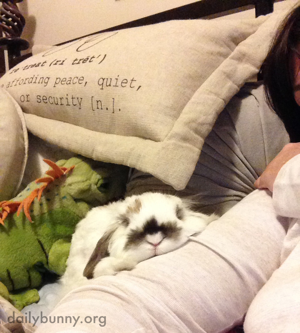 Time for Bedtime Snuggles for Bunny and His Human