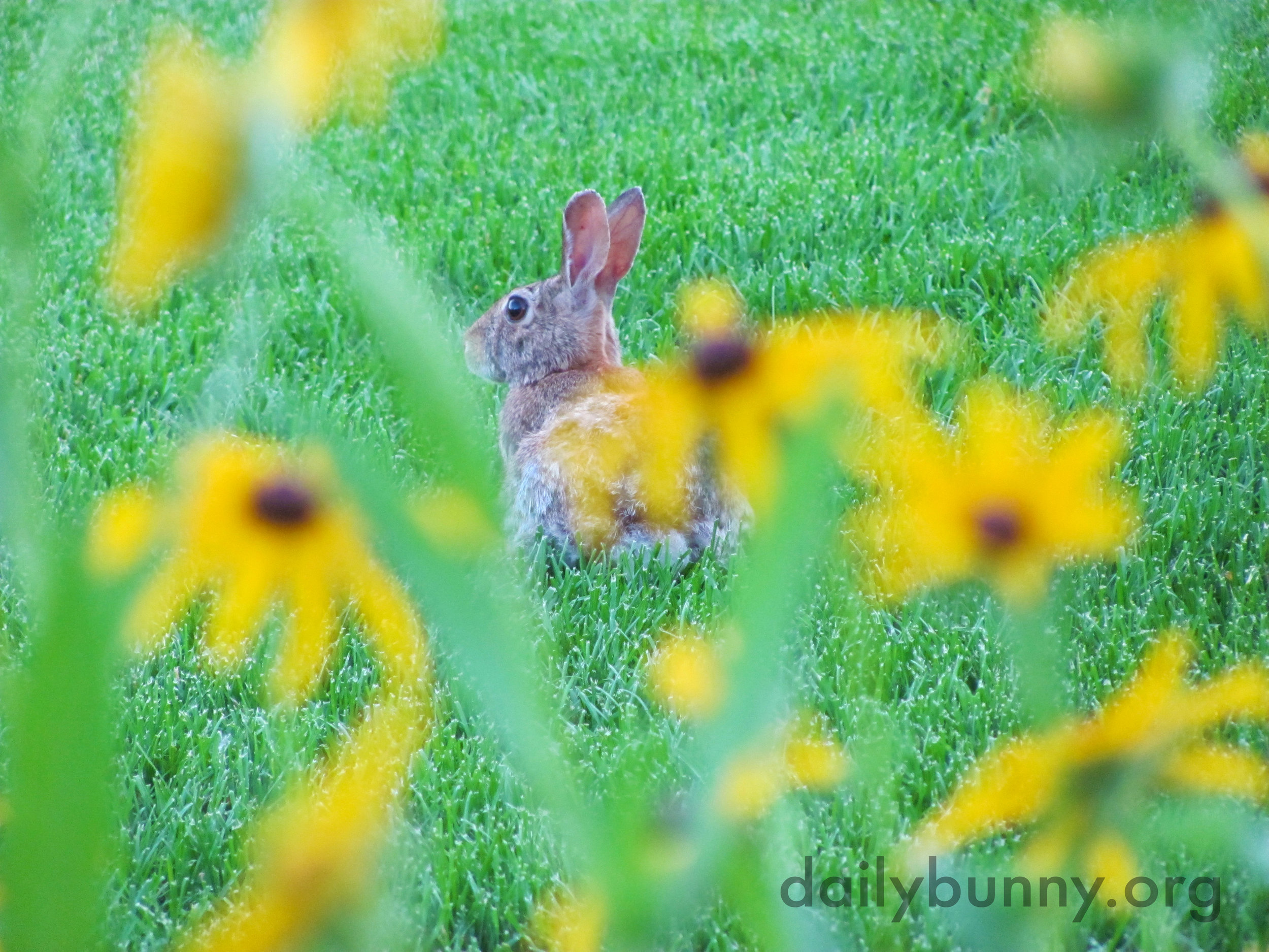 Wild Bunny Knows the Paparazzi Is Lurking Behind Those Flowers Somewhere