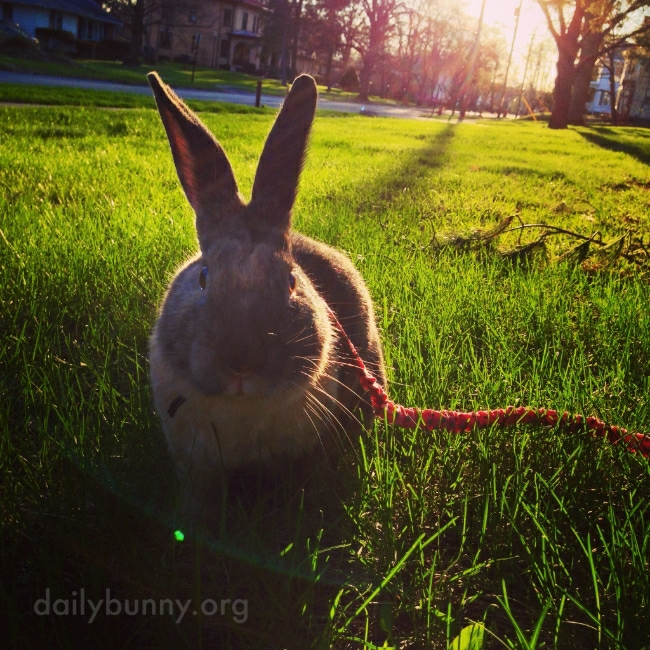 All Right, Human, One Photo - Then We Hop and Run and Binky!