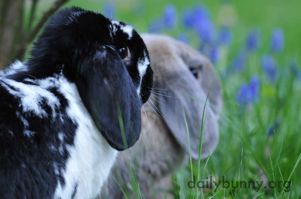 Bunnies Catch Some Air, Taste Some Plants, and Otherwise Explore and Enjoy the Great Outdoors 4