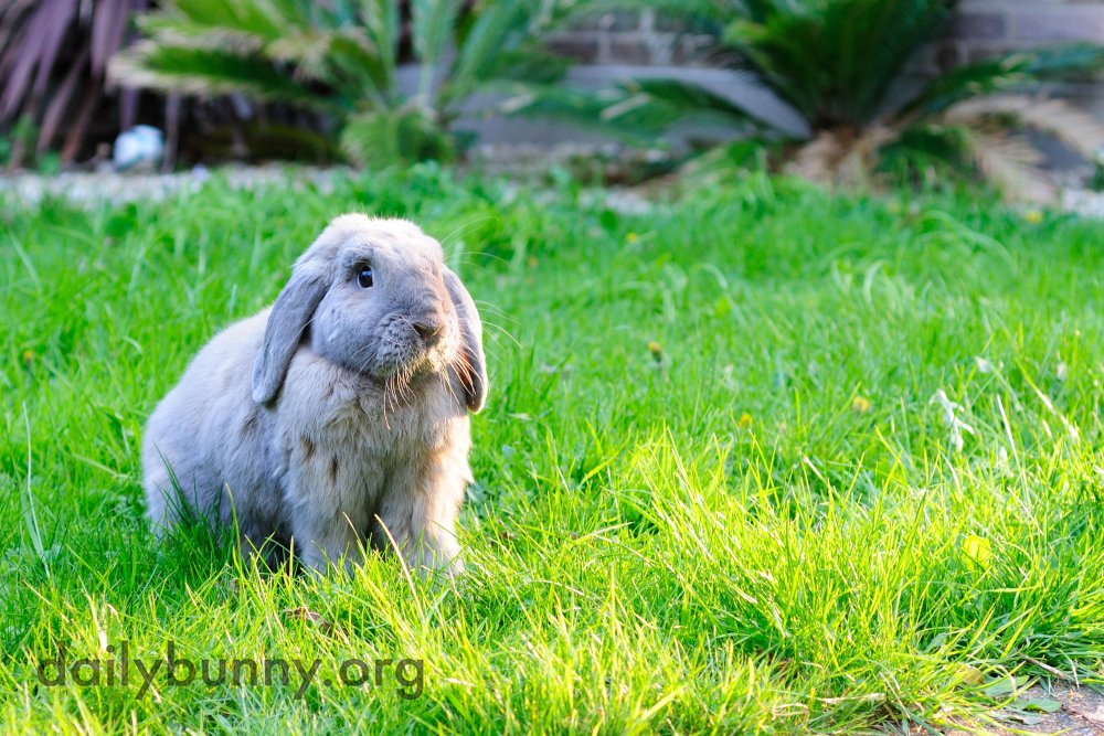 Bunnies Catch Some Air, Taste Some Plants, and Otherwise Explore and Enjoy the Great Outdoors 7